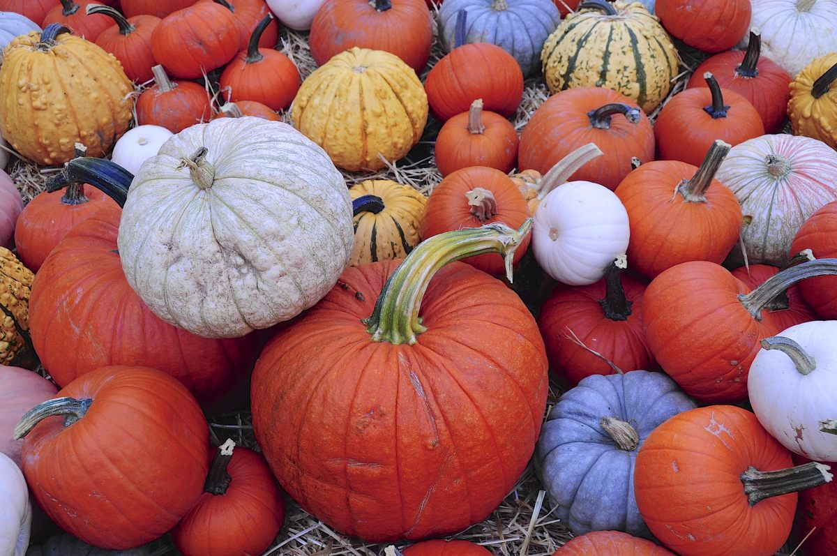Piedmont Pumpkin Patch.jpg