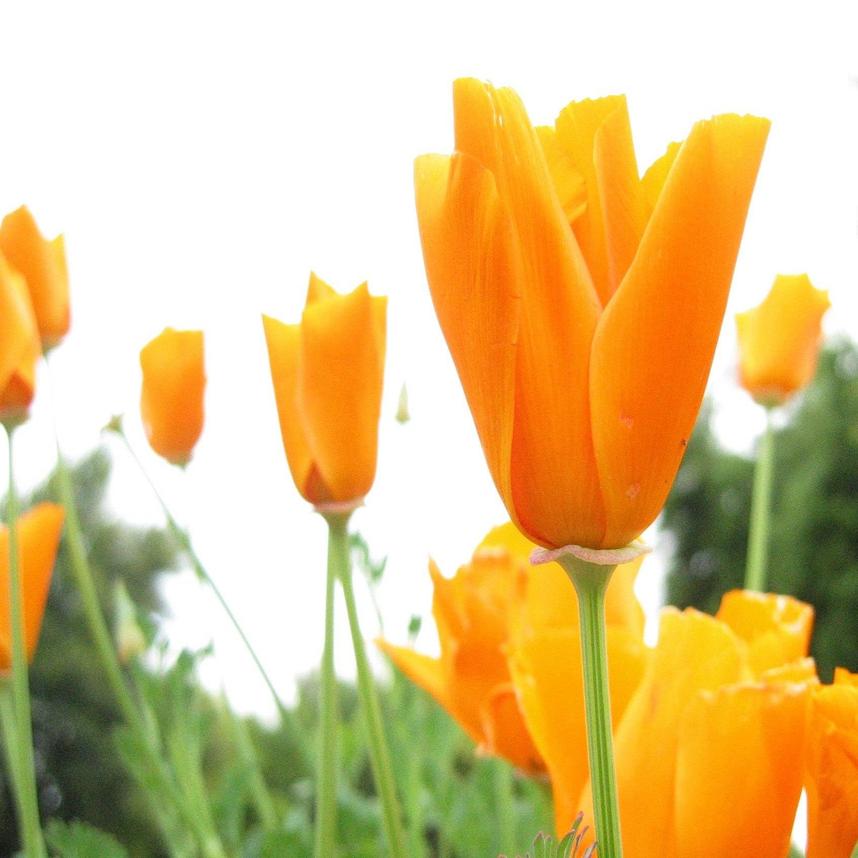 flower0.jpg