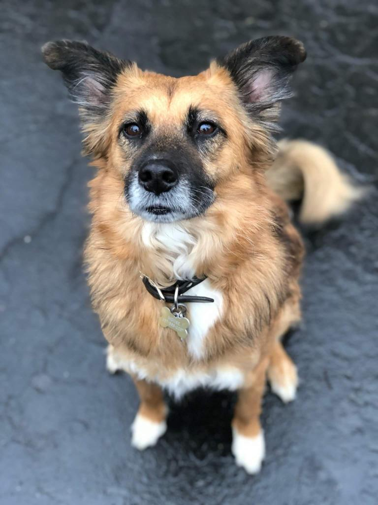 Rescue and you will be rescued! - Moose is a 5 year old shepherd mix. He is up to date on all his shots. He needs a special owner. He is house trained, crate trained and loves walks. He needs an experienced owner.Please contact Melissa The Dog Mother LLC. at (617) 407-9887