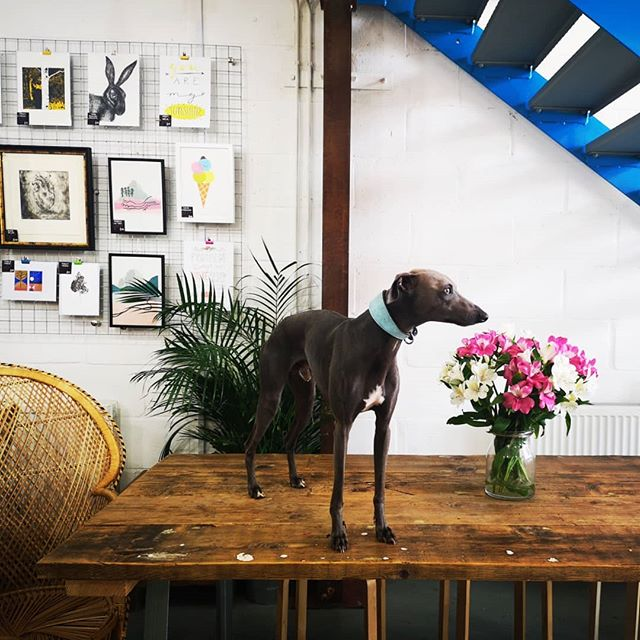 What a treat to have my Riley dog back helping in the coffee shop 🐶🐶 he is absolutely loving it and so just a big thanks to @dockyardbristol studio people for putting up with his frenzy and frolics while @hiddentemple_bristol is settling into his new space + getting it dog proof!  #puppylove #dogsinwork #coffeeshop #extractcoffeeroasters #spikeislandbristoluk #bristol247 #bristolmarina #coworkingspace #artstudio #igersbristol
