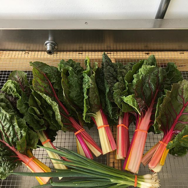 Rainbow Swiss Chard going to @rutabagas_comfort_food for the farm to table series on Tuesday nights at @whiteelmbrewing. See you tomorrow for Market and CSA pick up! 5:30-8
