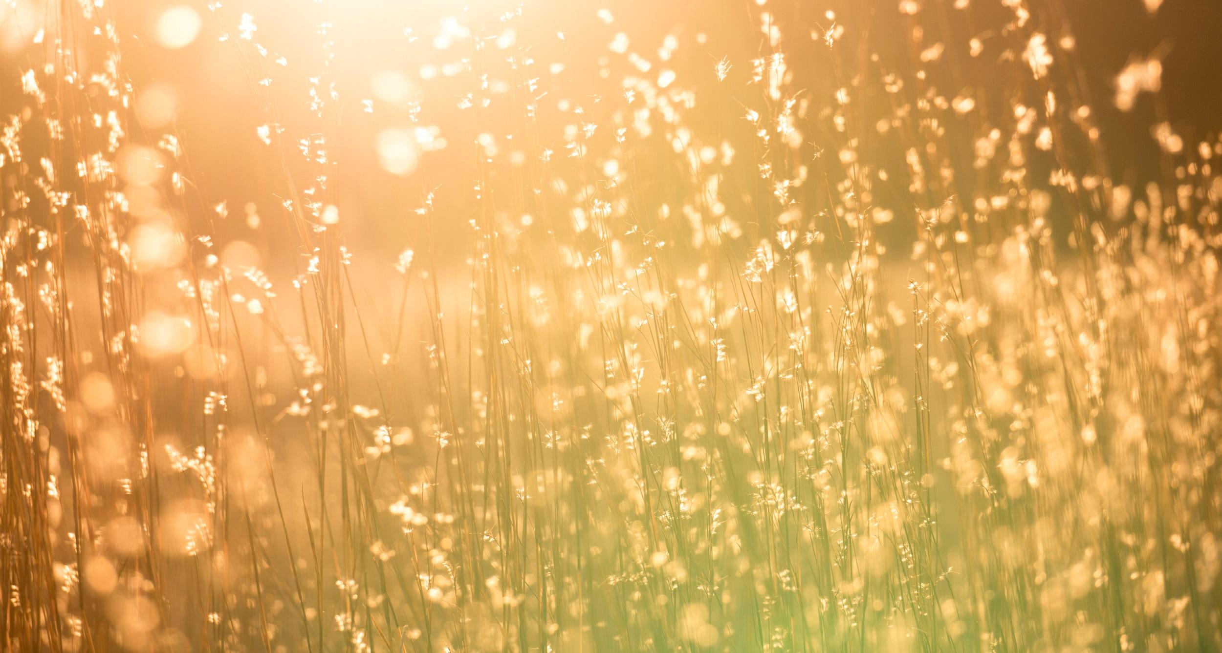 """""""..livskraften i naturen som inspirerar oss och rycker oss med"""" -"""