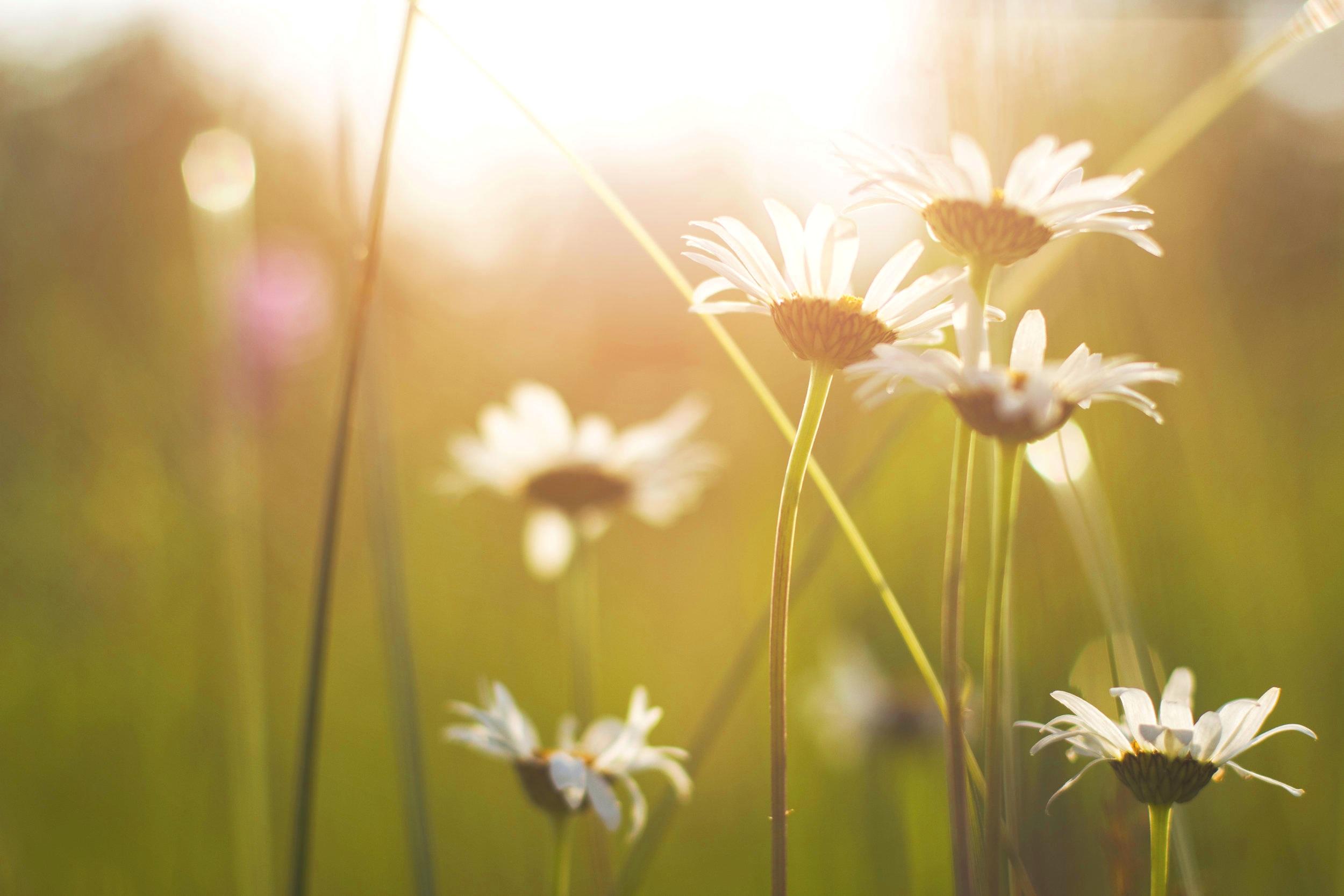 Det är på solstånden som man verkligen känner urtidens vingslag! -