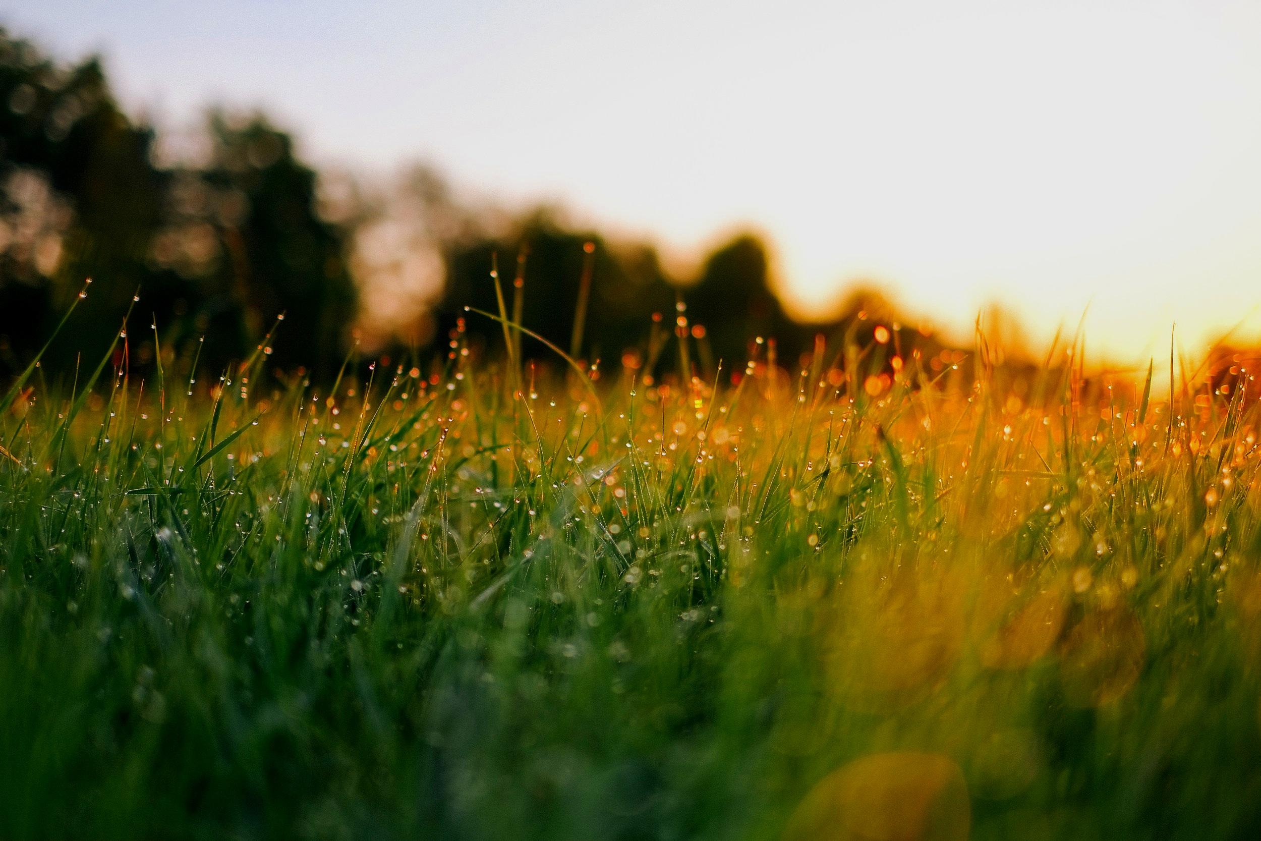 Gå ut i midsommarnatten, ta av dig skorna och låt naturen jorda dig. -