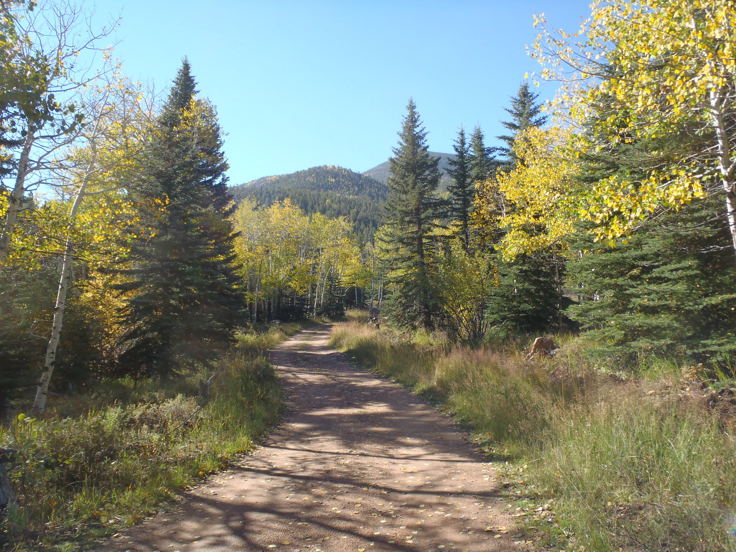 Private drive leading to Royal Elk Meadow in fall.