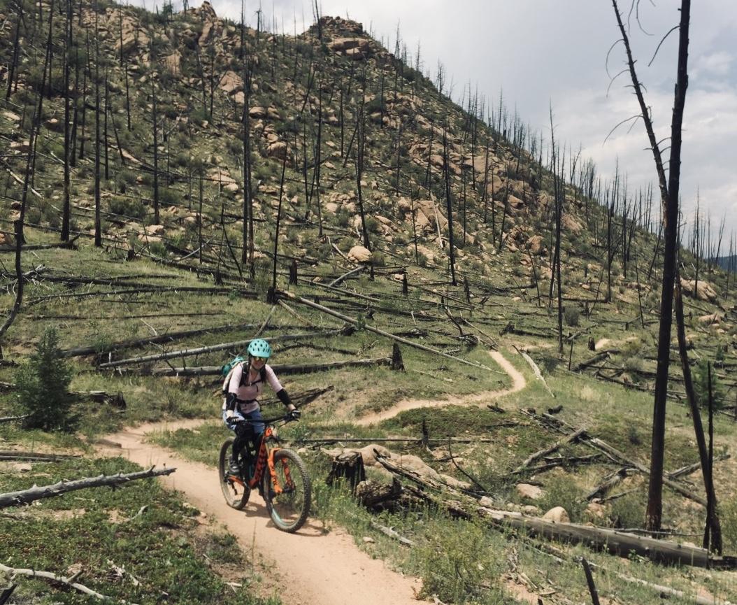 Mountain biking through a burned area in Buffalo Creek.