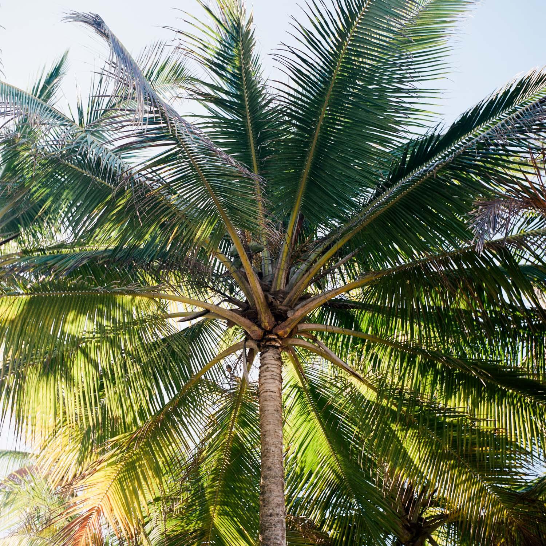 01-puerto-rico-palmtree.jpg