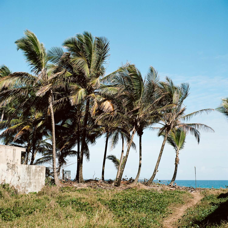 38-rincon-palm-trees.jpg