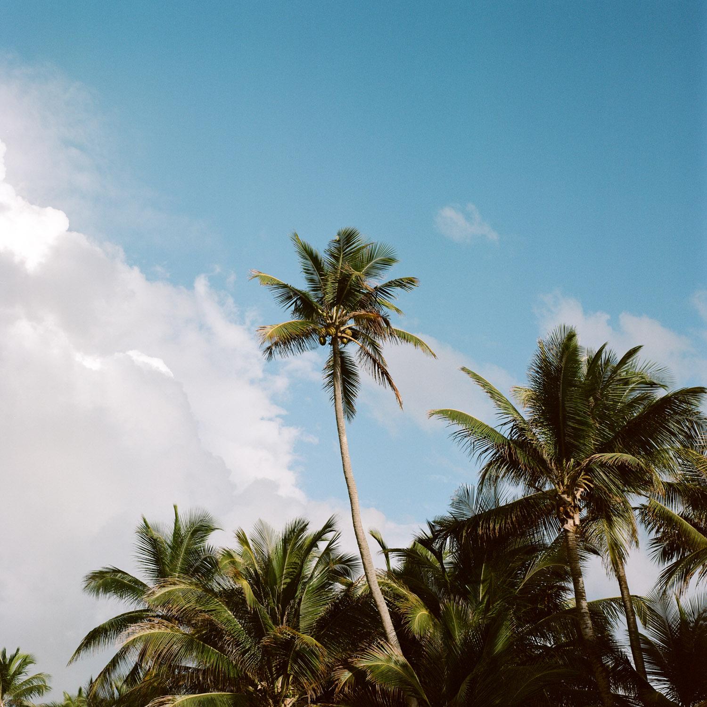 49-rincon-palm-tree.jpg