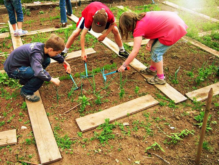school-garden.jpg