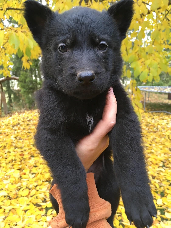 Bella Bear.JPG