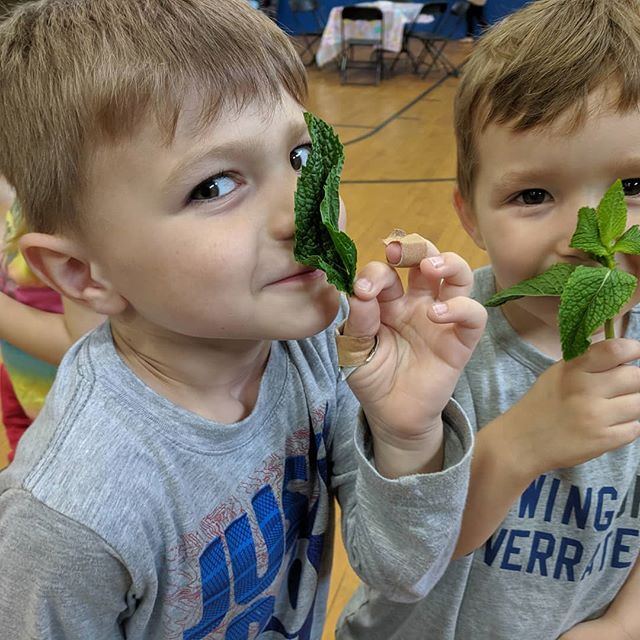We cook with all 5 senses! Smelling our fresh herbs with our pre-school chefs! Had a great time at camp cooking and making art with @kinderboxkids