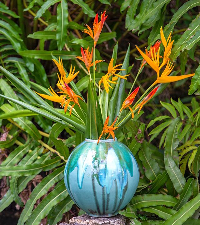 Vase in d bush! Close up version. . . #moonvase #tropicalflowers #ceramics #stoneware #tropicalinteriors #highfired #highfiredceramics #heliconia #tobago #madeintobago #101reasonstobago #planetceramics #planetceramicstobago #handcraftedintobago