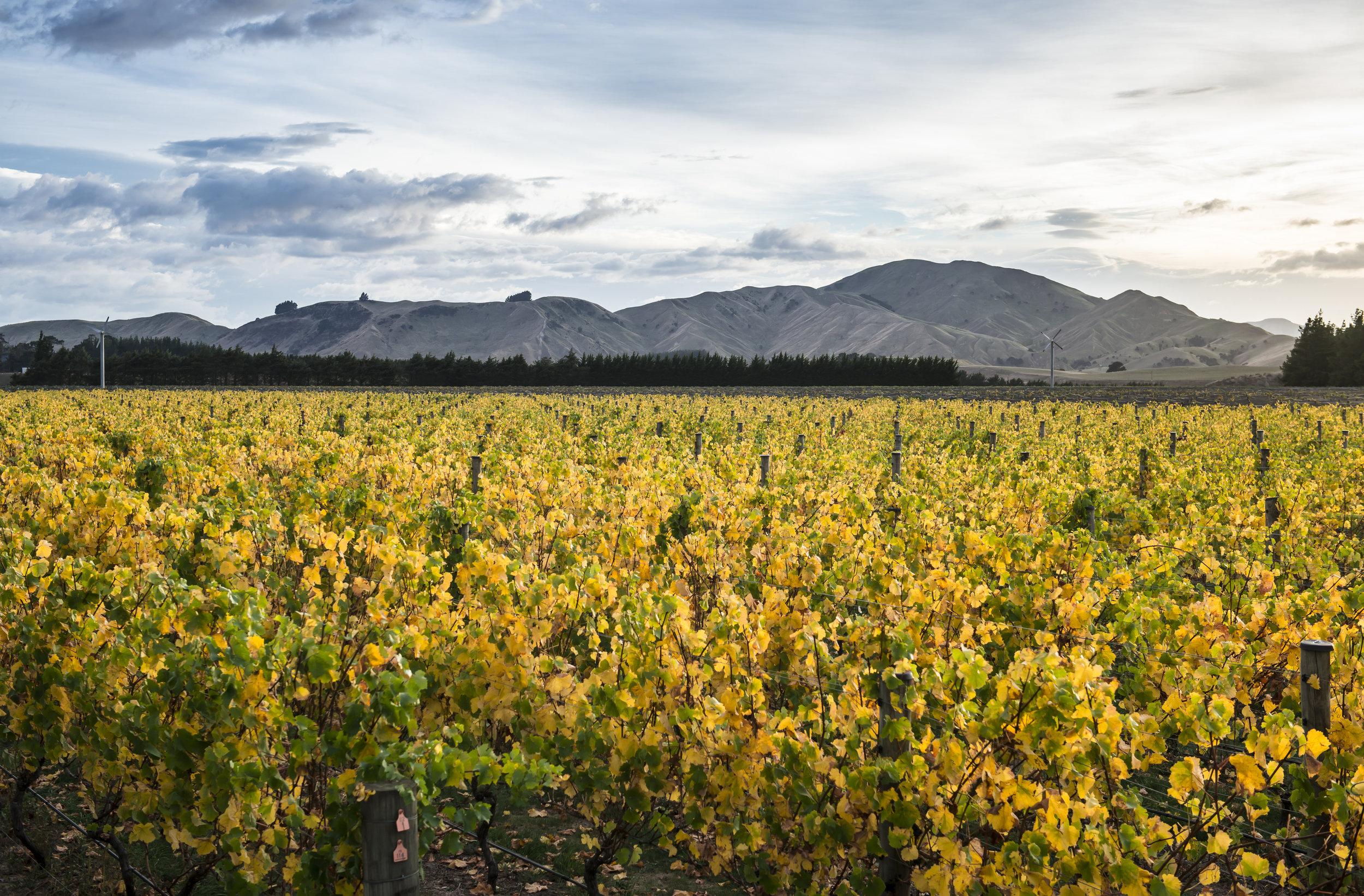 Escarpment Vineyard of New Zealand's Wairarapa wine region (image by New Zealand Wine).