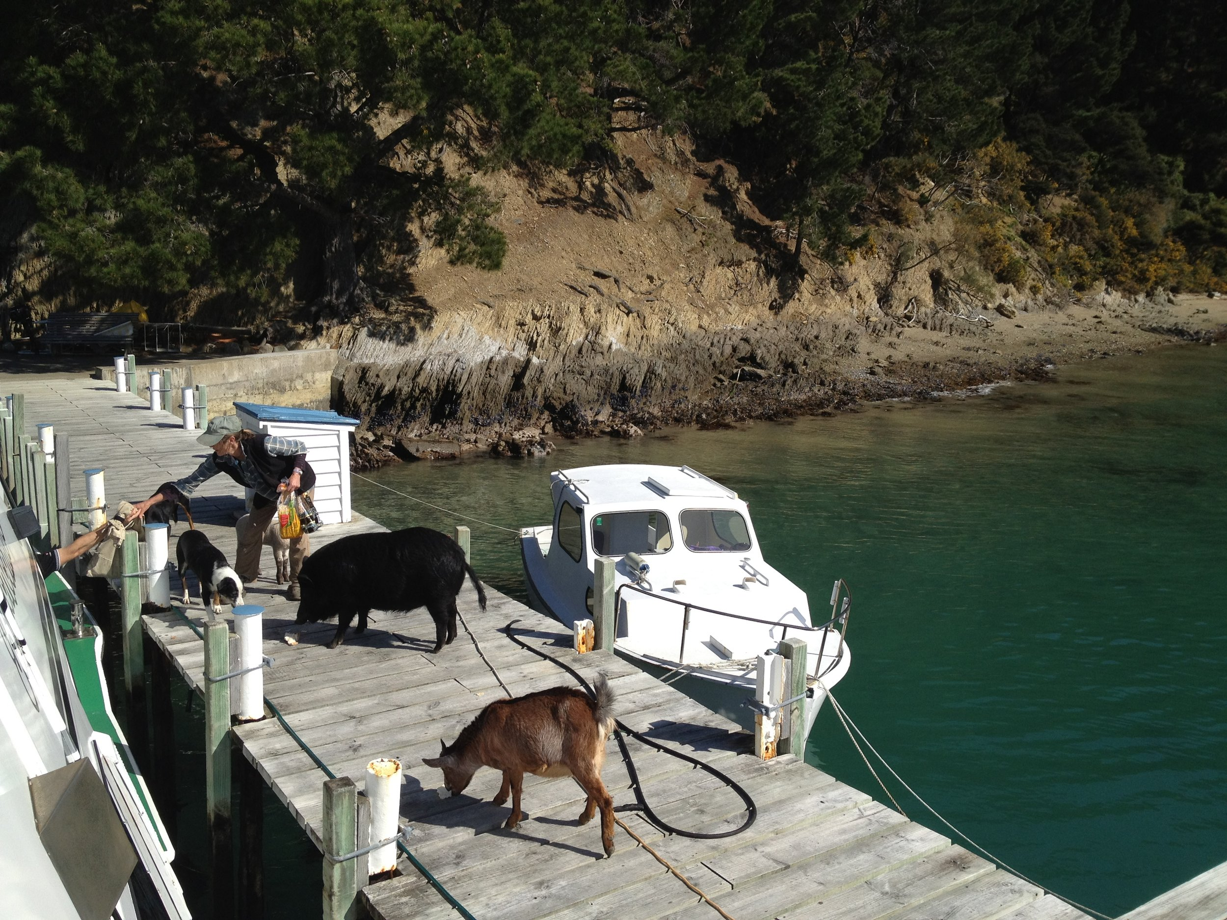 A regular mail boat service brings goods and visitors to Arapawa Island from Picton (image Jacqui Gibson).
