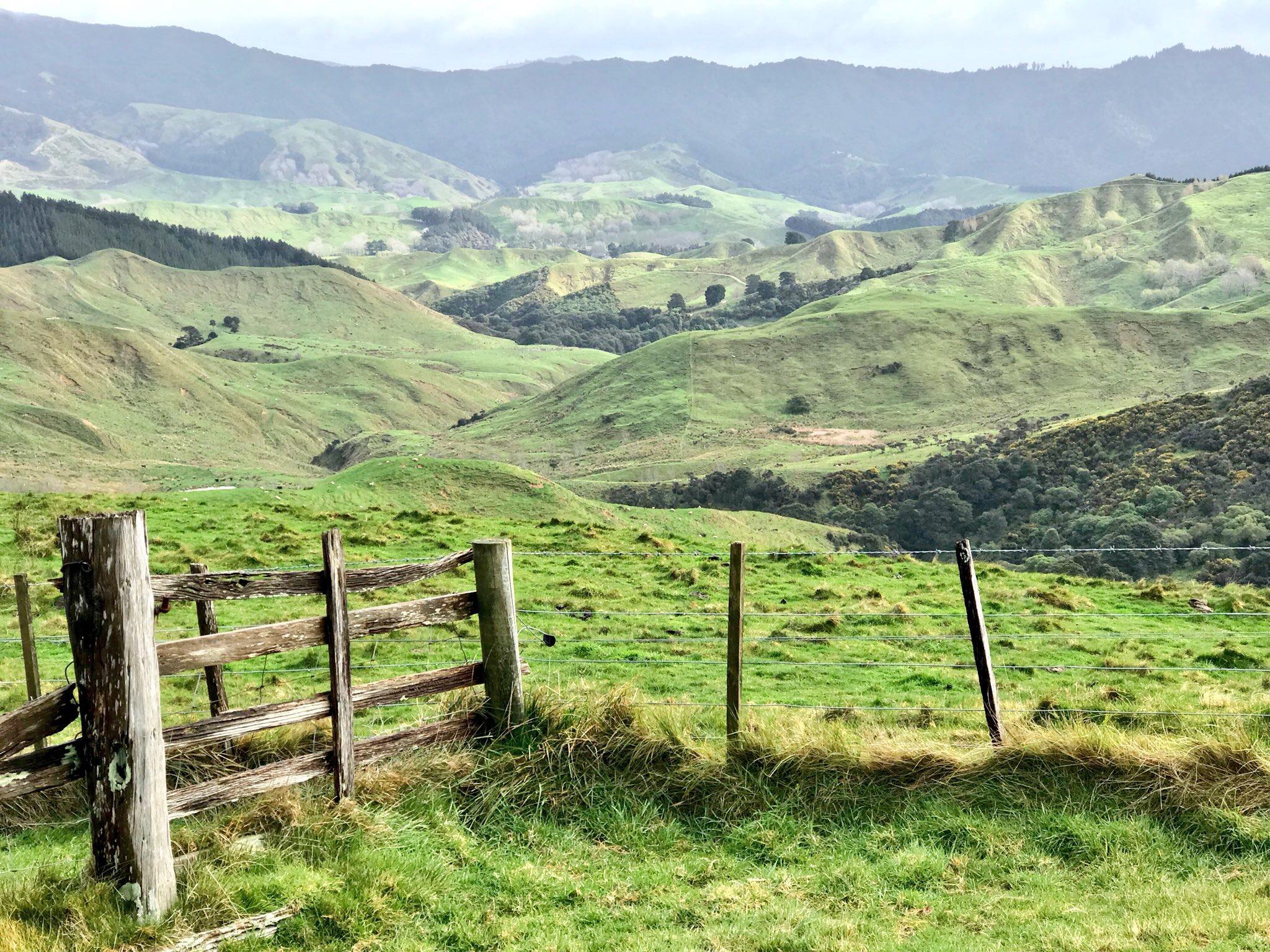 Farmland, Wairarapa (image by Jacqui Gibson).