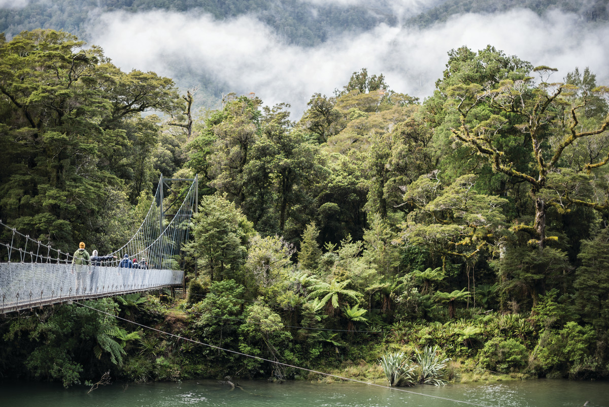 Hollyford Track, one of New Zealand's Great Walks (image care of Ngai Tahu Tourism).