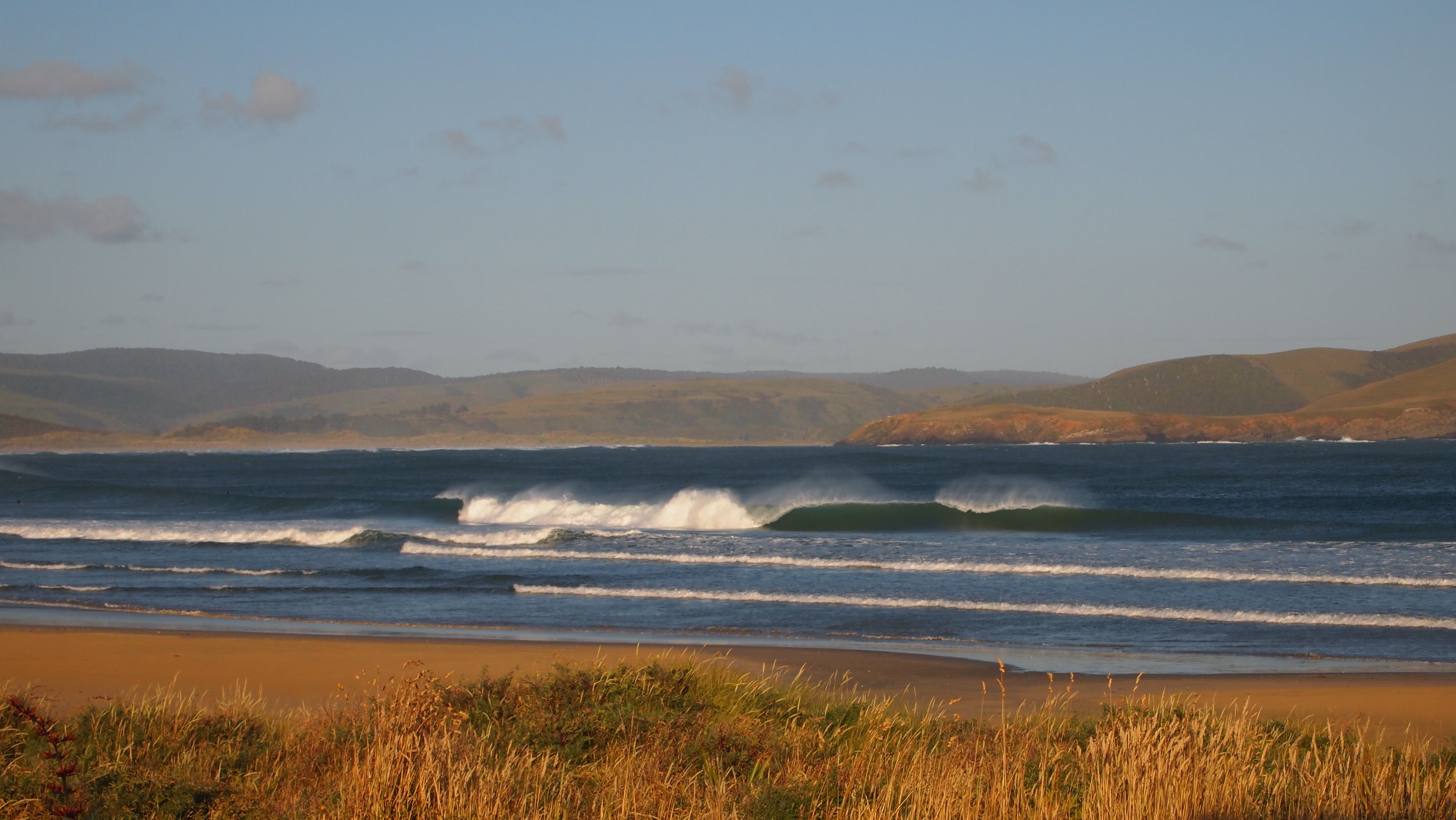 Curio Bay, The Catlins (image by Jacqui Gibson).