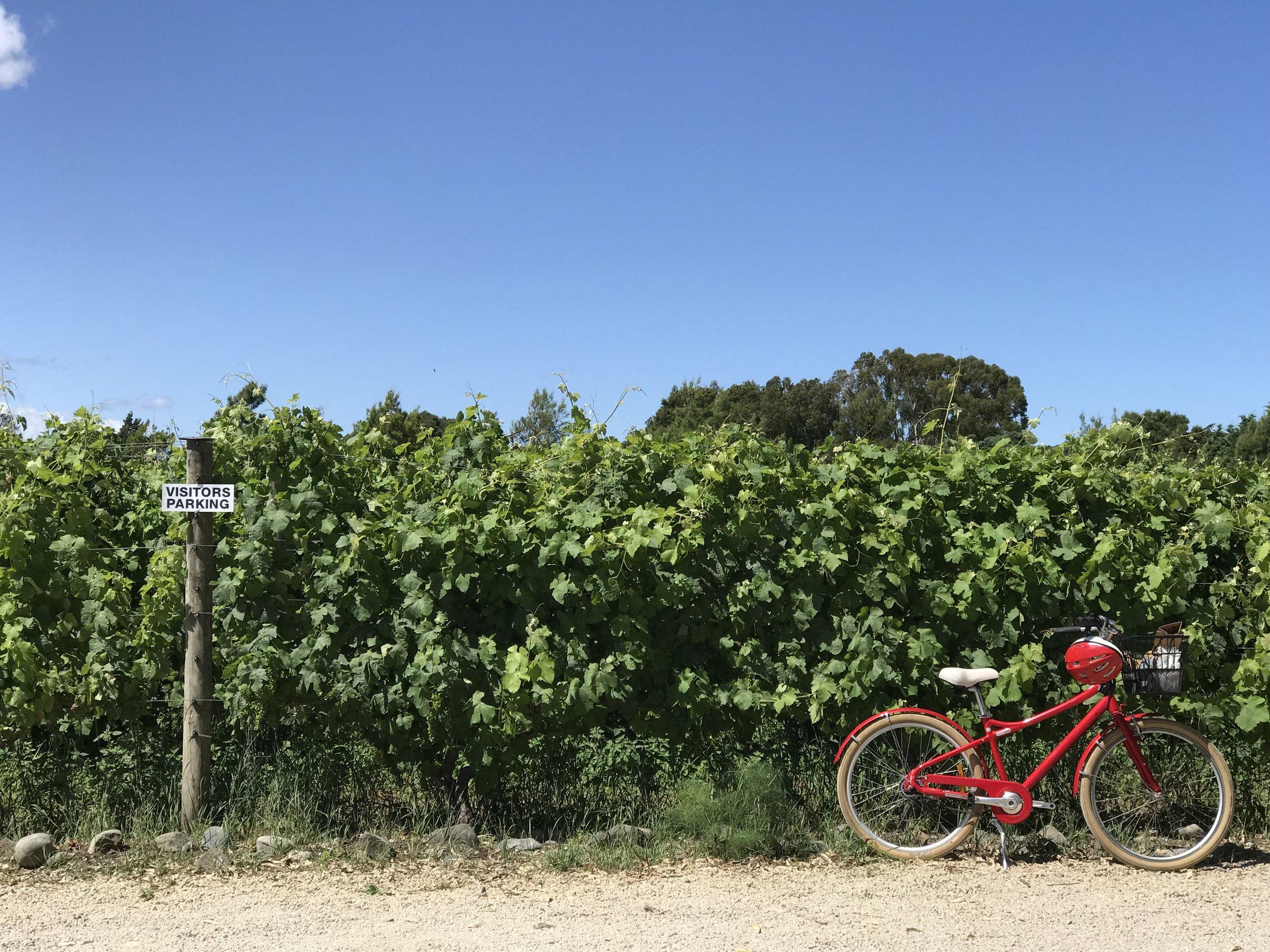 Cambridge Road vineyard, Martinborough, Wairarapa (image by Jacqui Gibson).