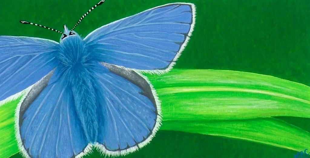 """Blue Beauty""   Original Framed - £60  Image 17 x 9 cm  Signed Print £15"