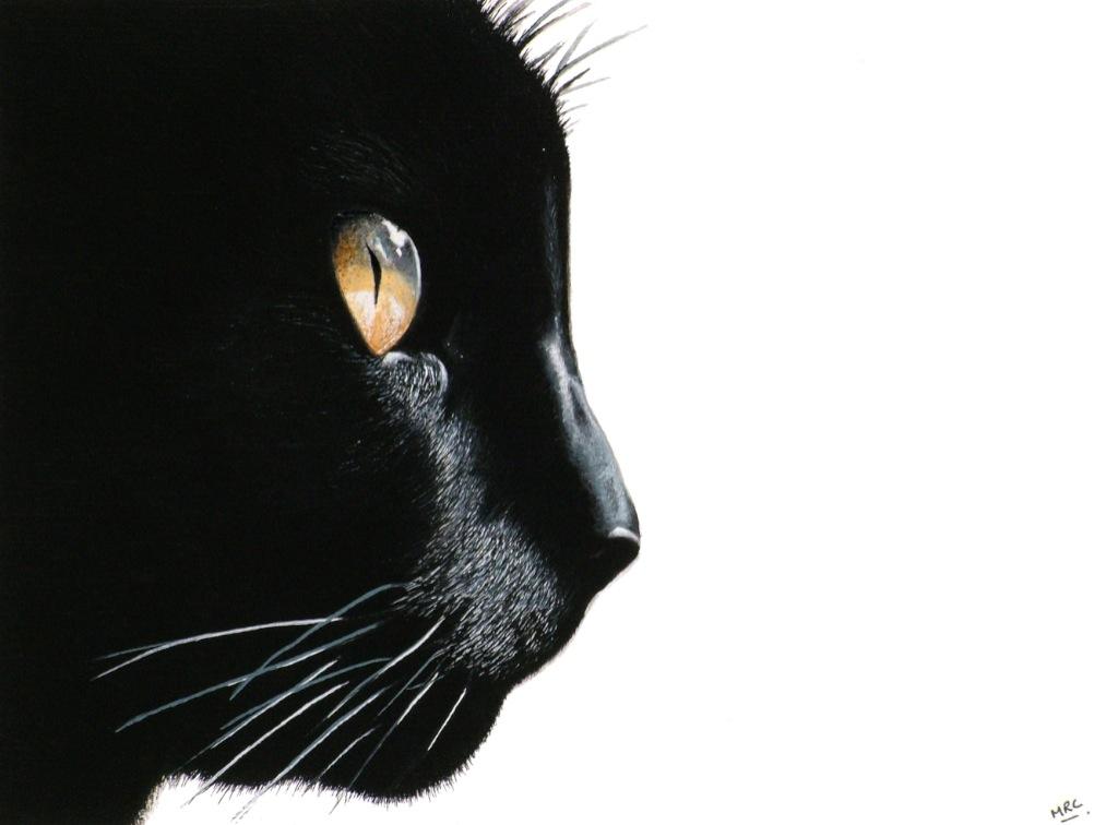 """Black Cat""   Original - NFS  Image 29 x 21 cm  Signed Prints £25"