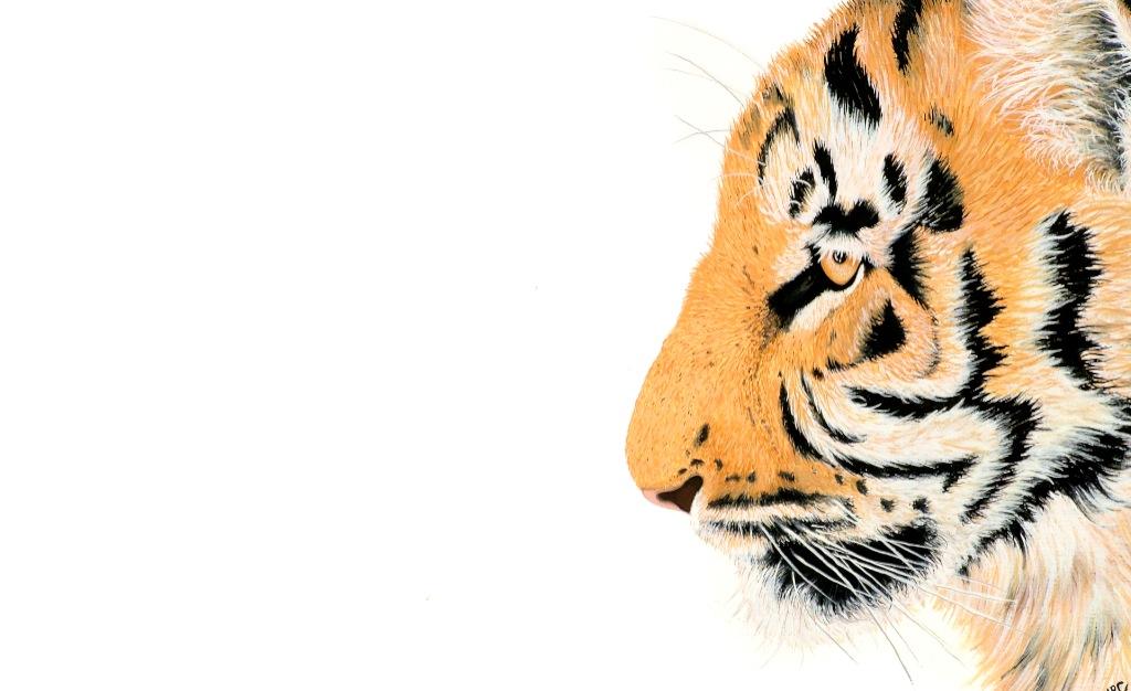 """""""Tiger's Eye""""   Original Framed - £290  Image 34 x 20 cm  Signed Print £30"""