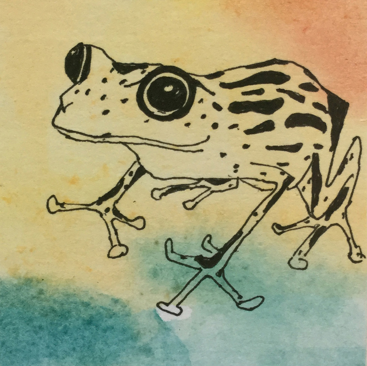 Frog-2-small.jpg
