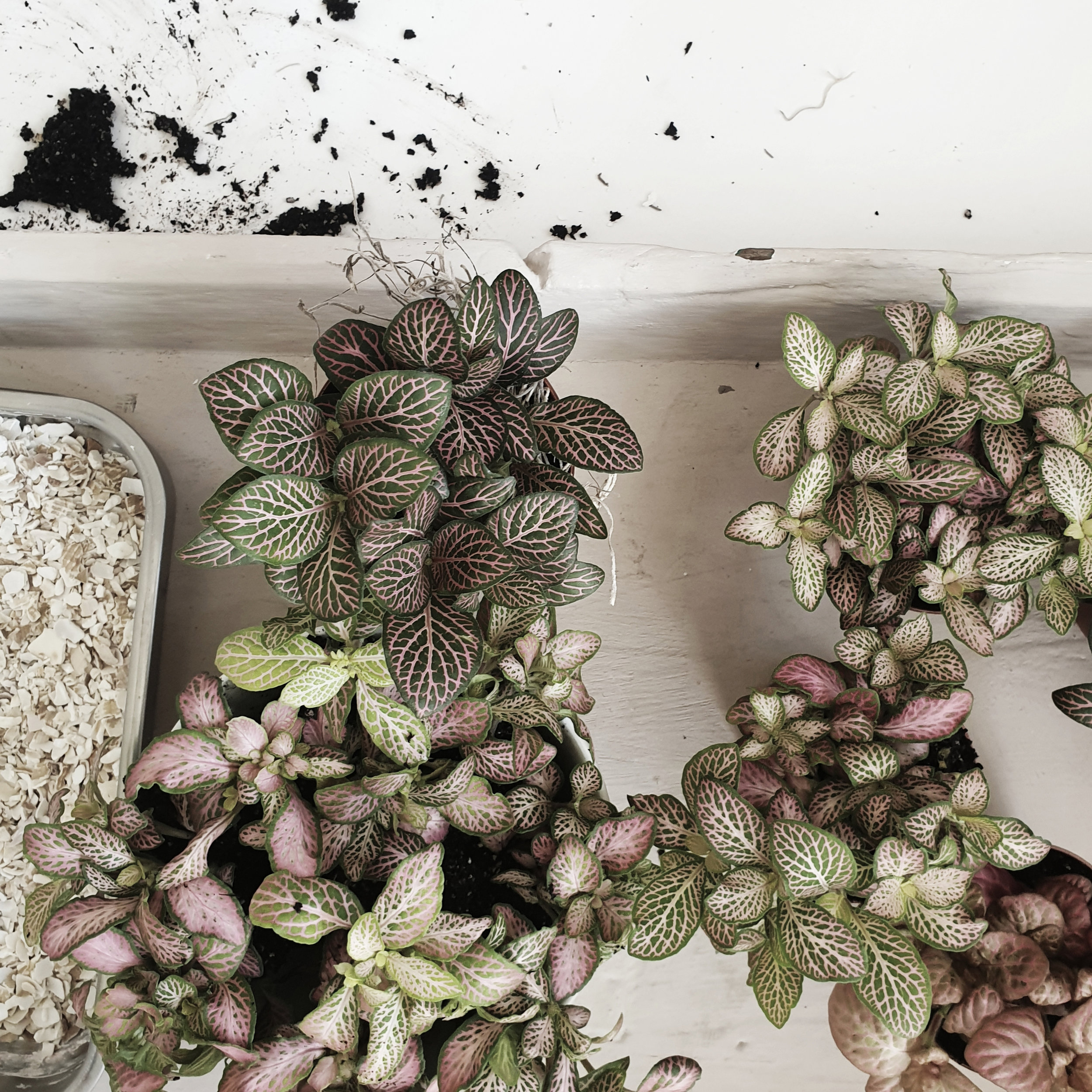 just plants.jpg