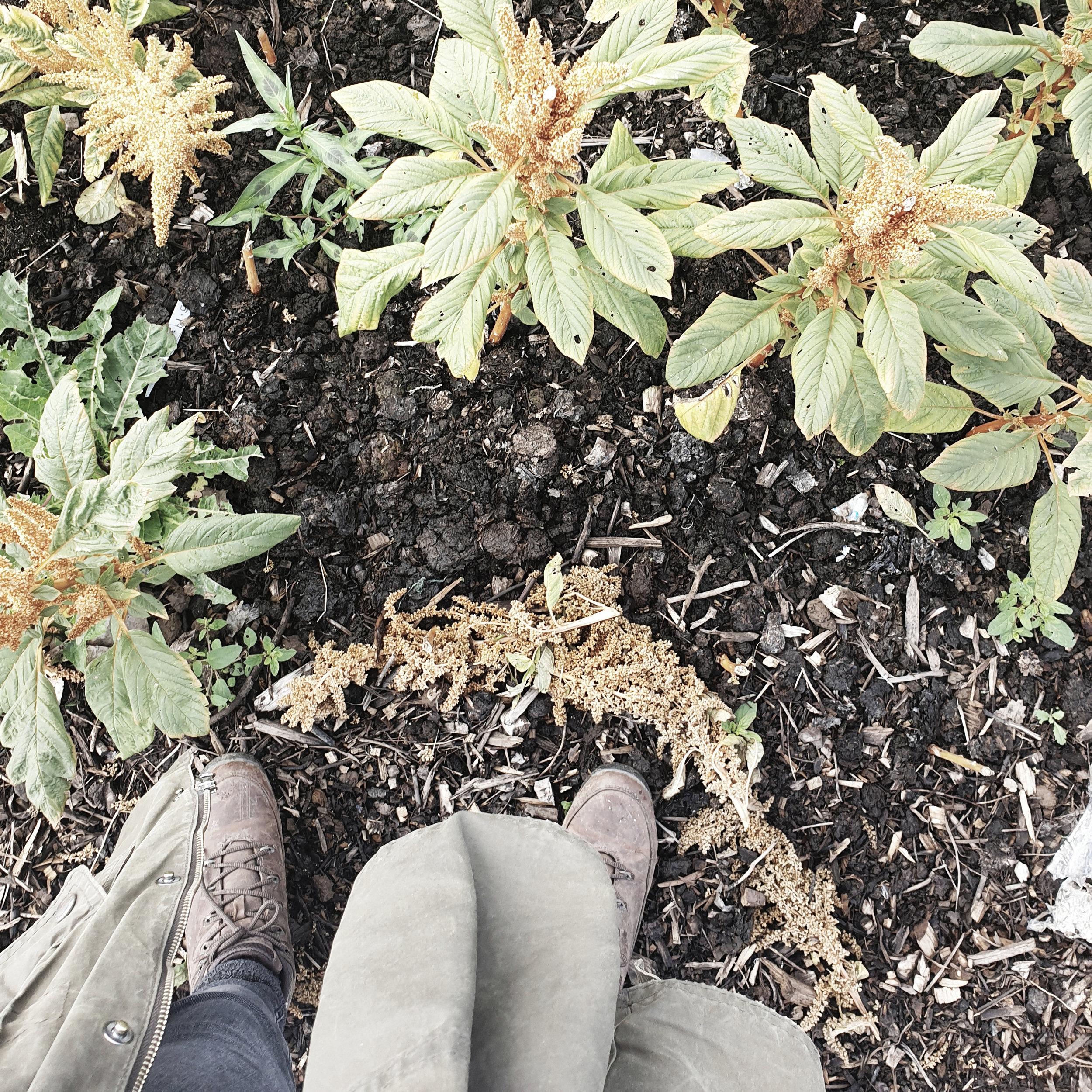 feet & plants.jpg