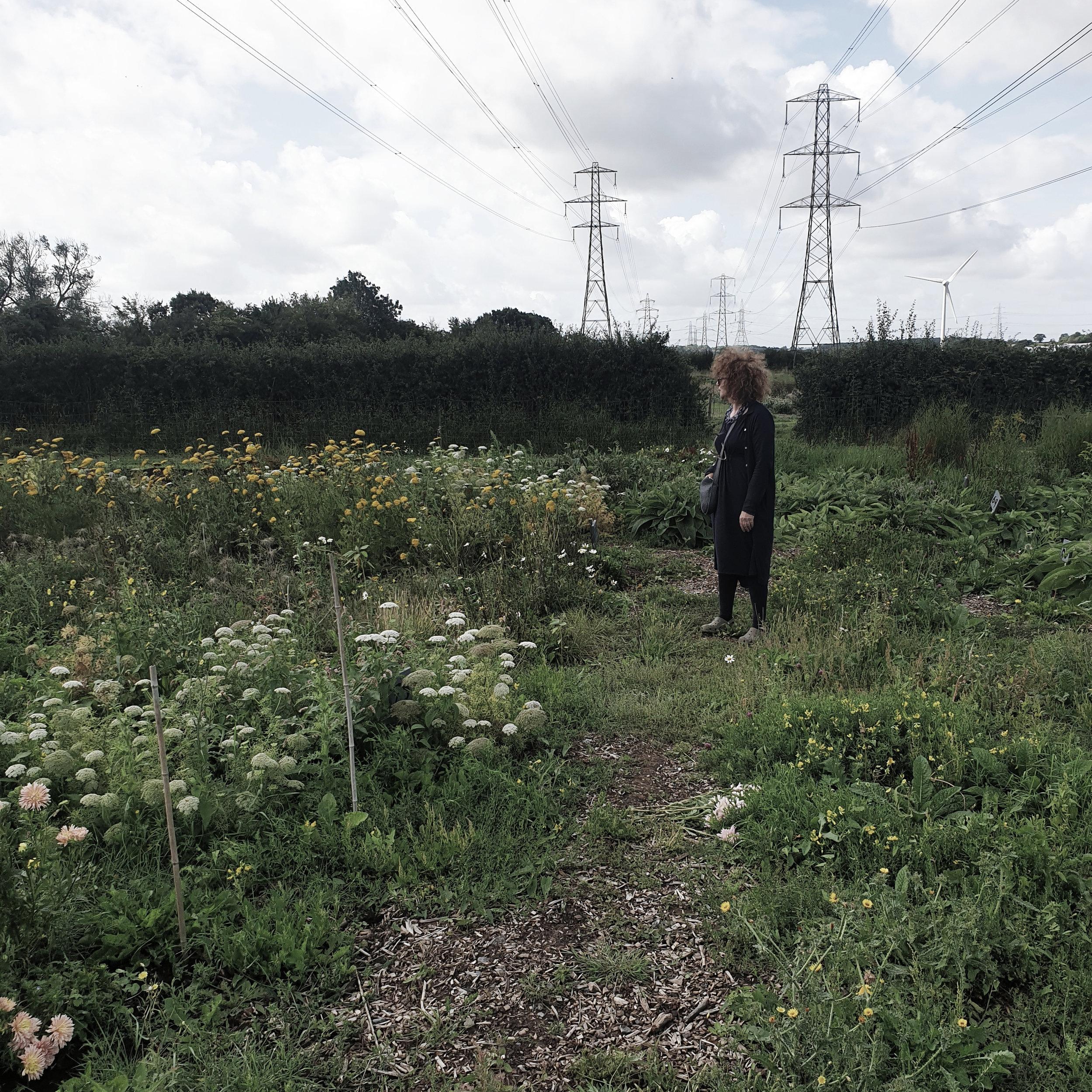 helen in field.jpg
