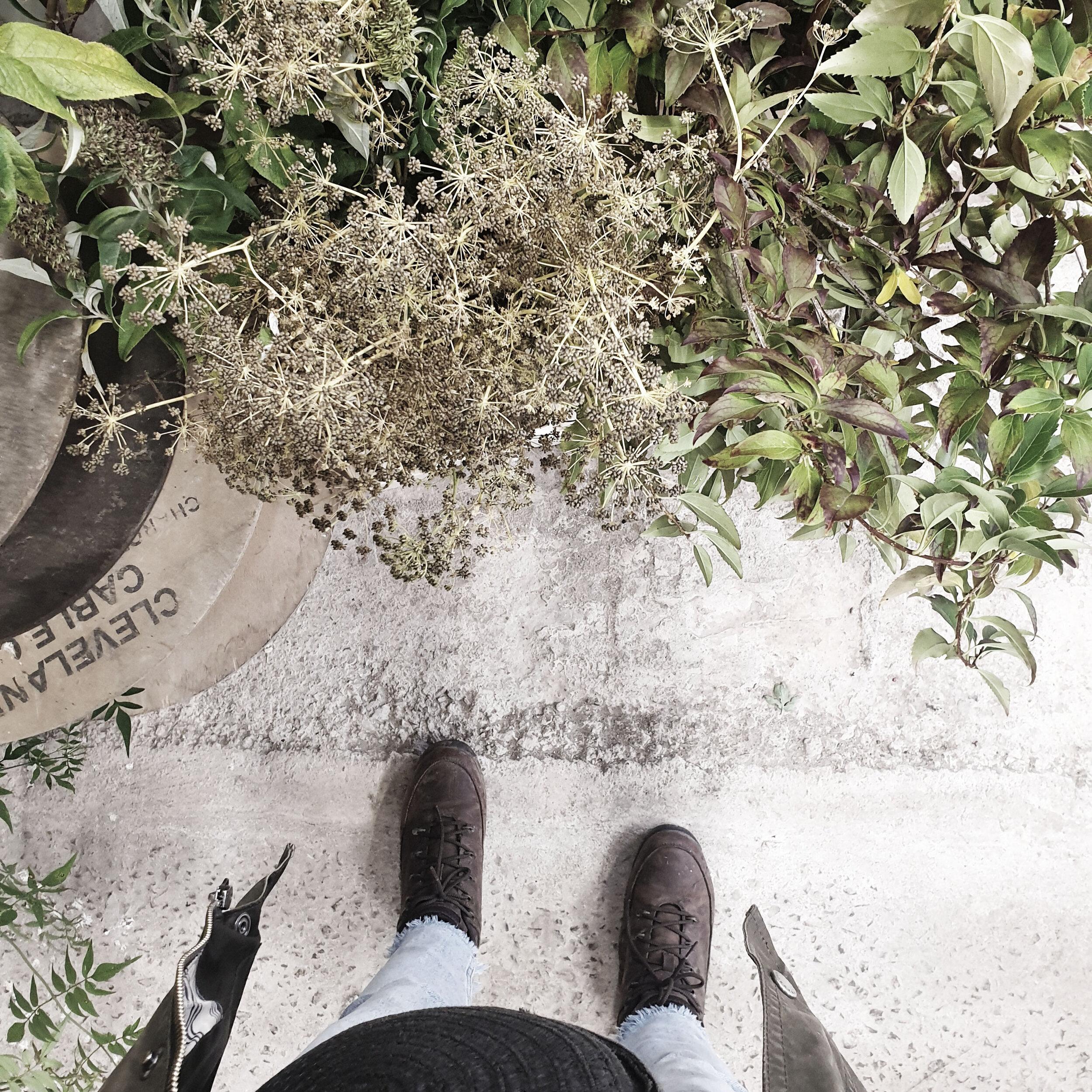 foliage in buckets studio.jpg