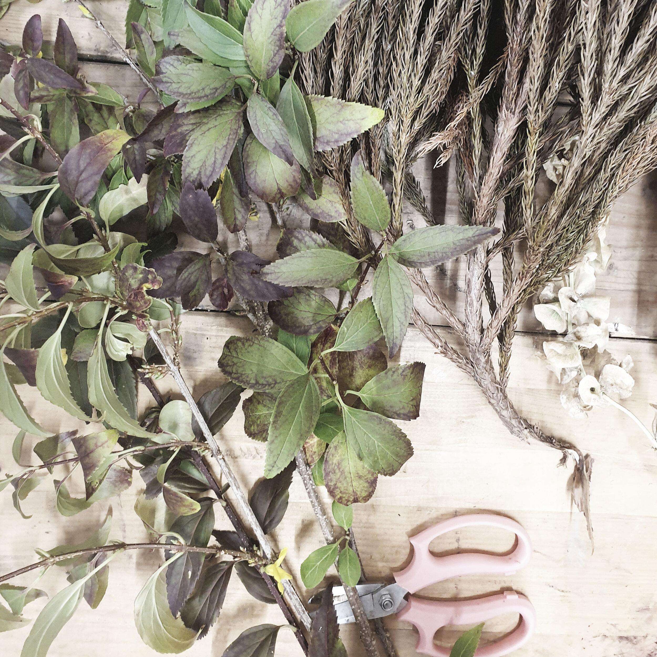 foliage selection.jpg