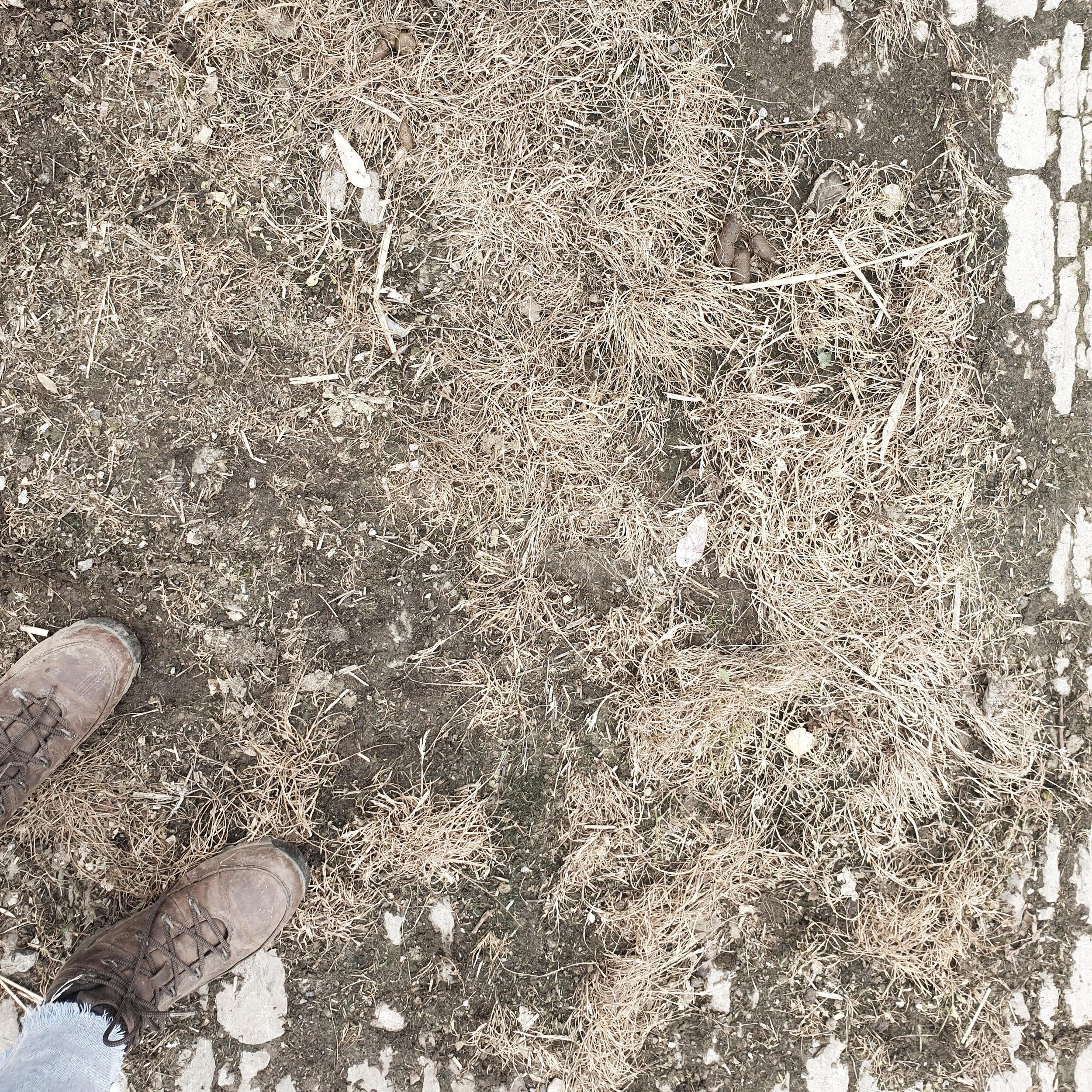 the ground.jpg