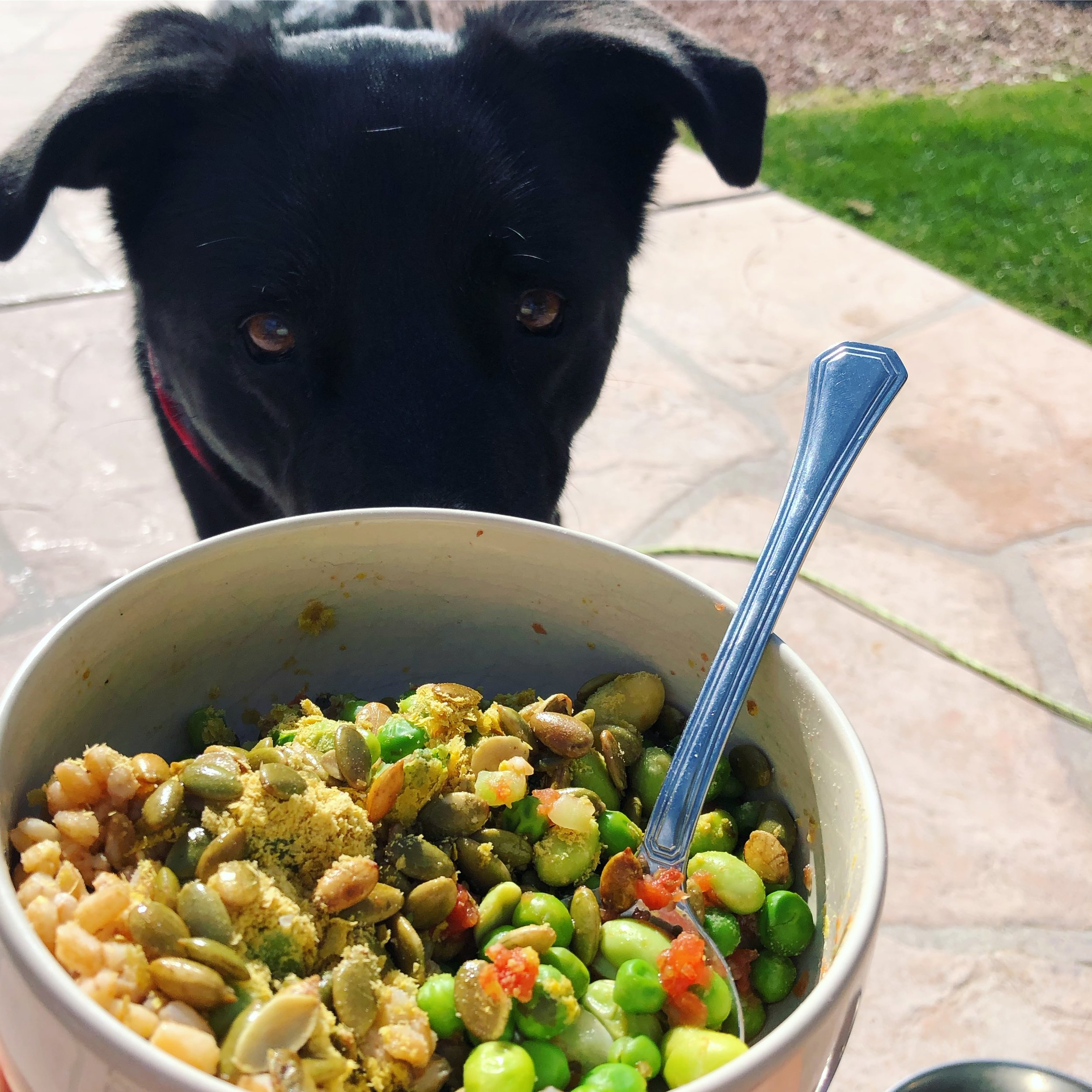 WE EAT SO GOOD, EVEN THE DOGS WANT TO GET ON THE VEGAN TRAIN! (Calm down, they eat a fish and poultry based kibble.)
