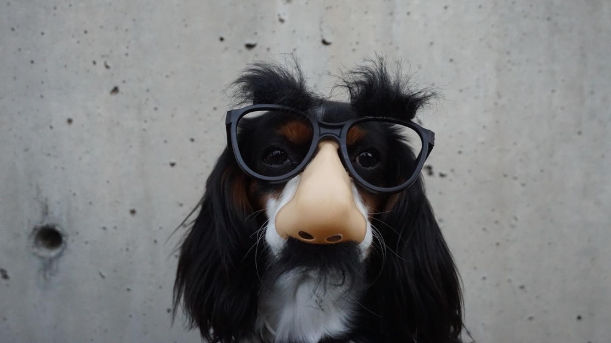 Dog Glasses.png