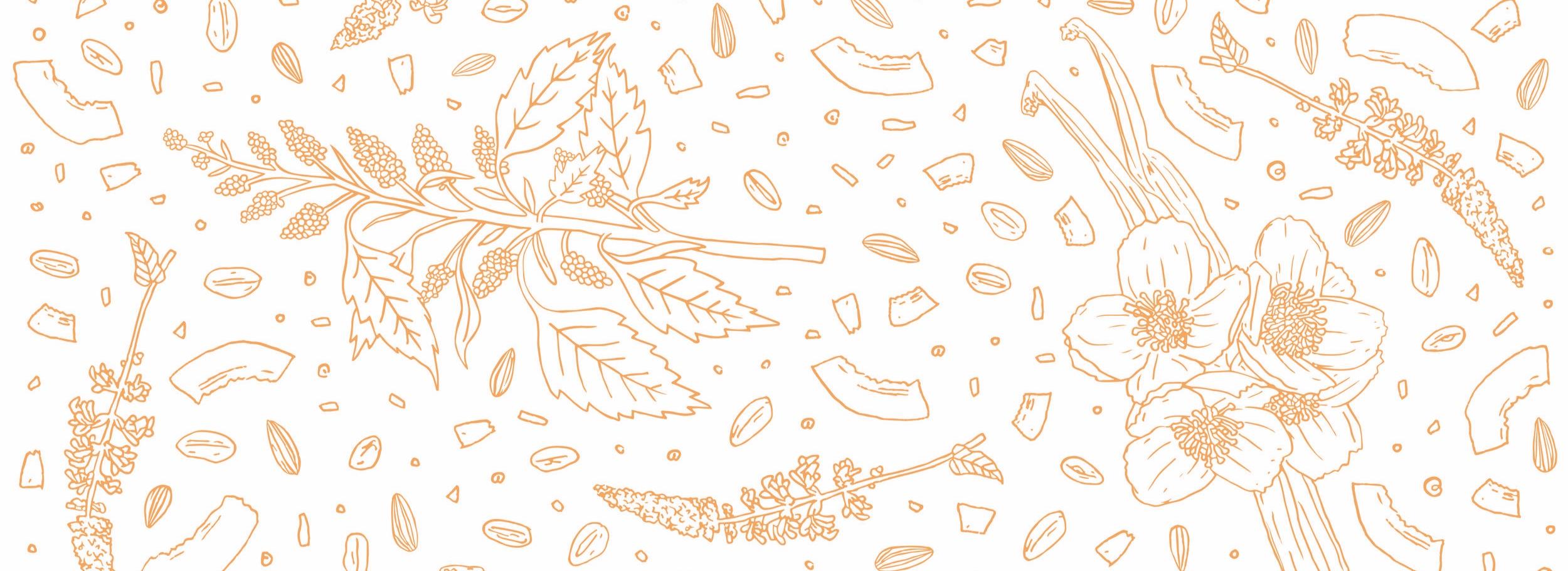 Qnola-Oat-Crunch_Quinoa_Cereal_Packaging-Design_Illustration.jpg