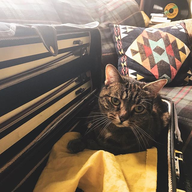 Cats and instrument cases. Truly, a match made in heaven. 🐈  @sweetwatersound #cat #sweetwater #violin