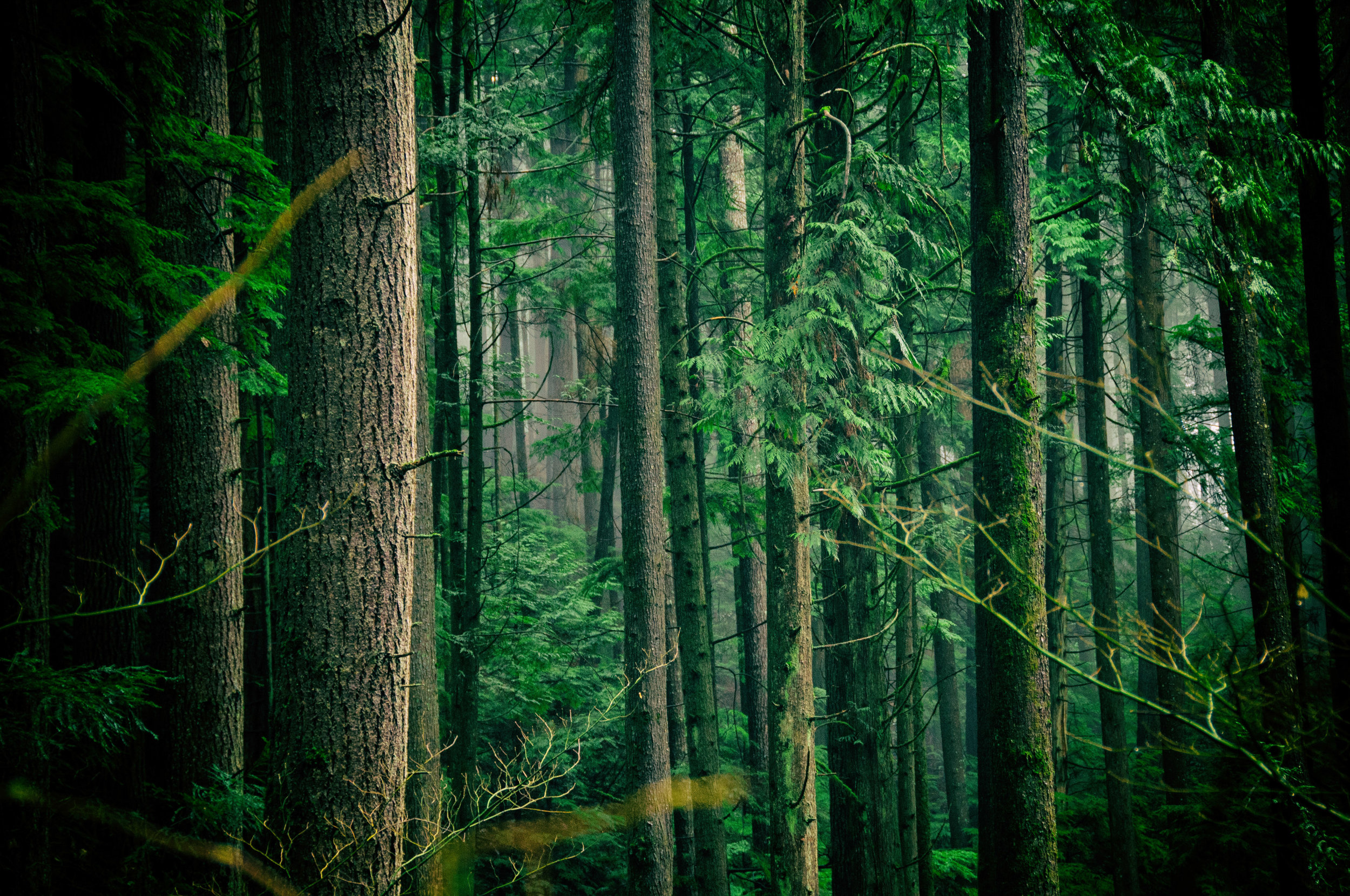 Forest Bathing Experience - with Cat Pantaleo