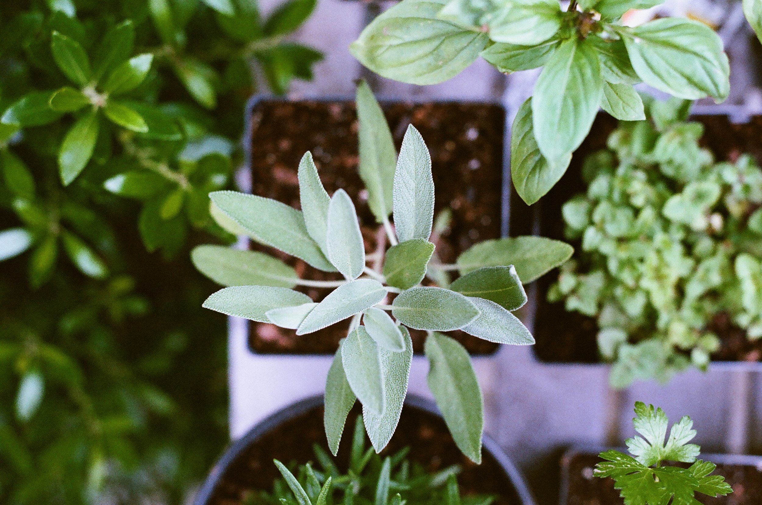 Growing Herbs in the Rockies - with Tammi Hartung
