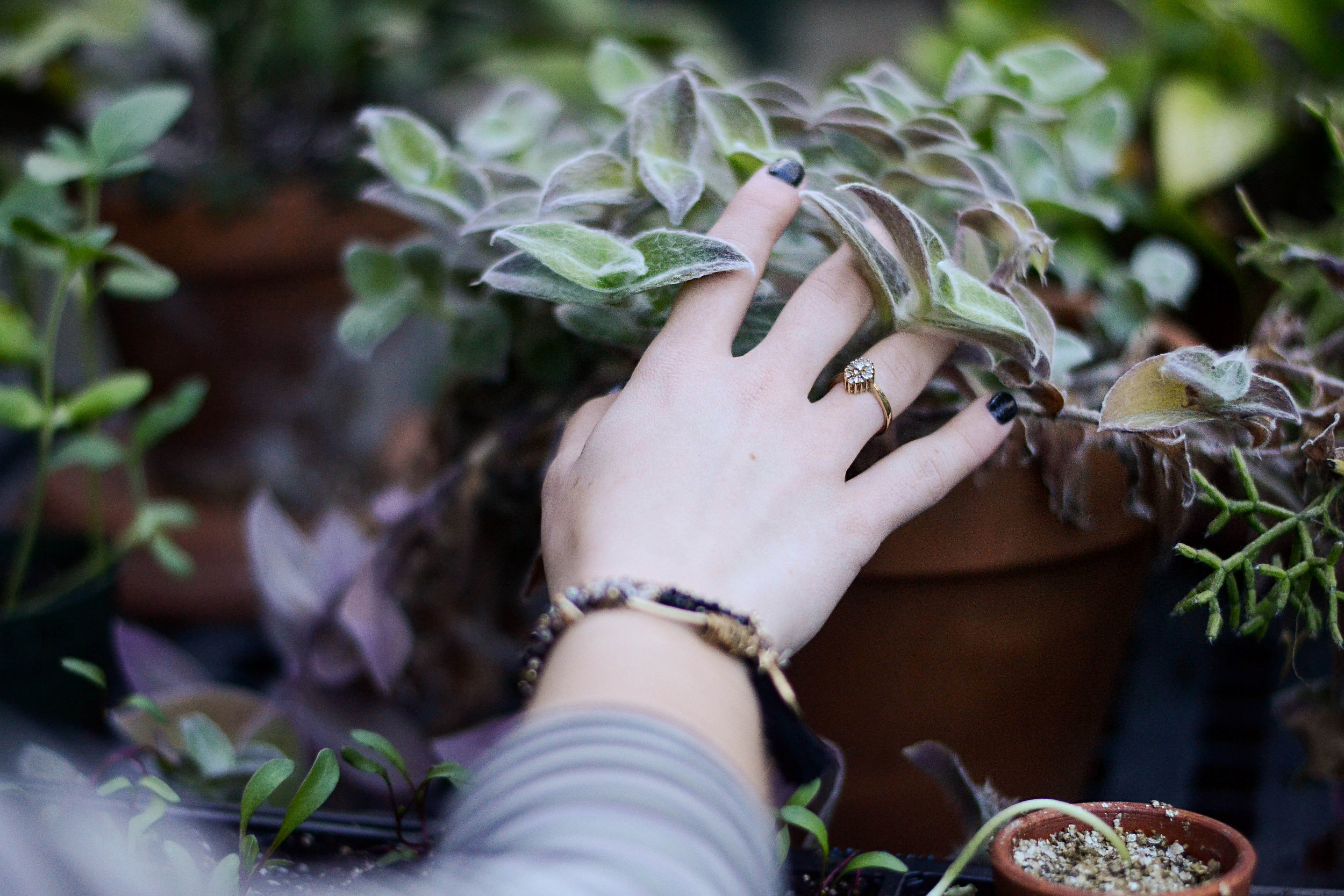 Intuitive Herbalism:Remembering How to Listen to the Plants - with Erin Smith