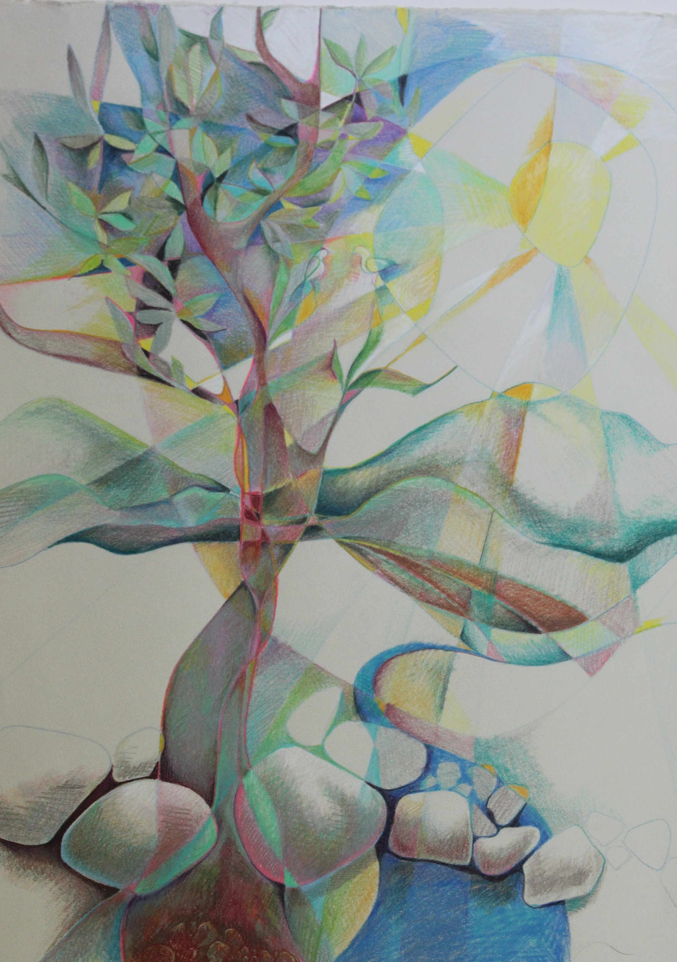 "TREE STUDY 1. 22 x 16"". Prismacolor . original . $95"