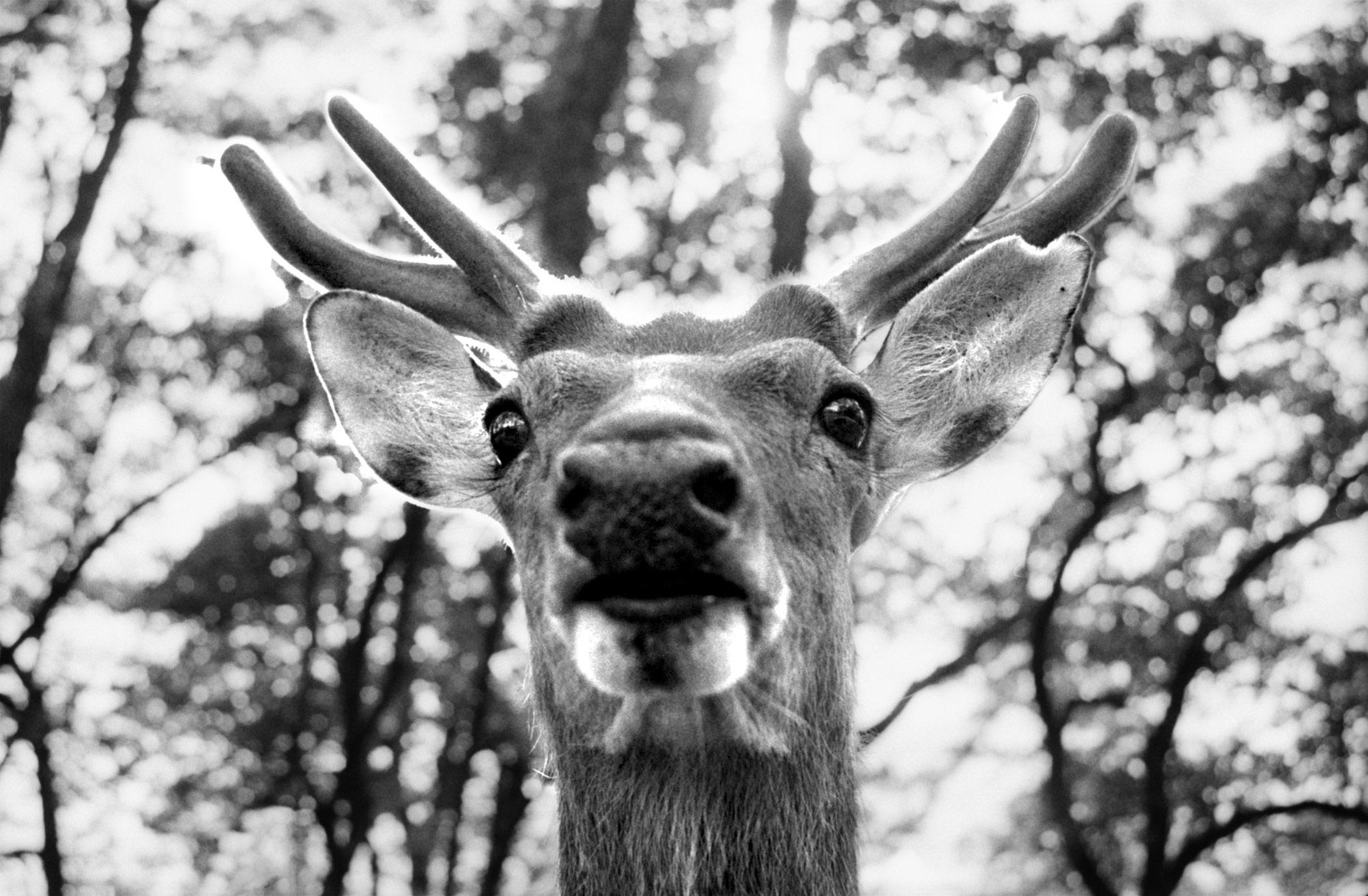Deer_2.jpg
