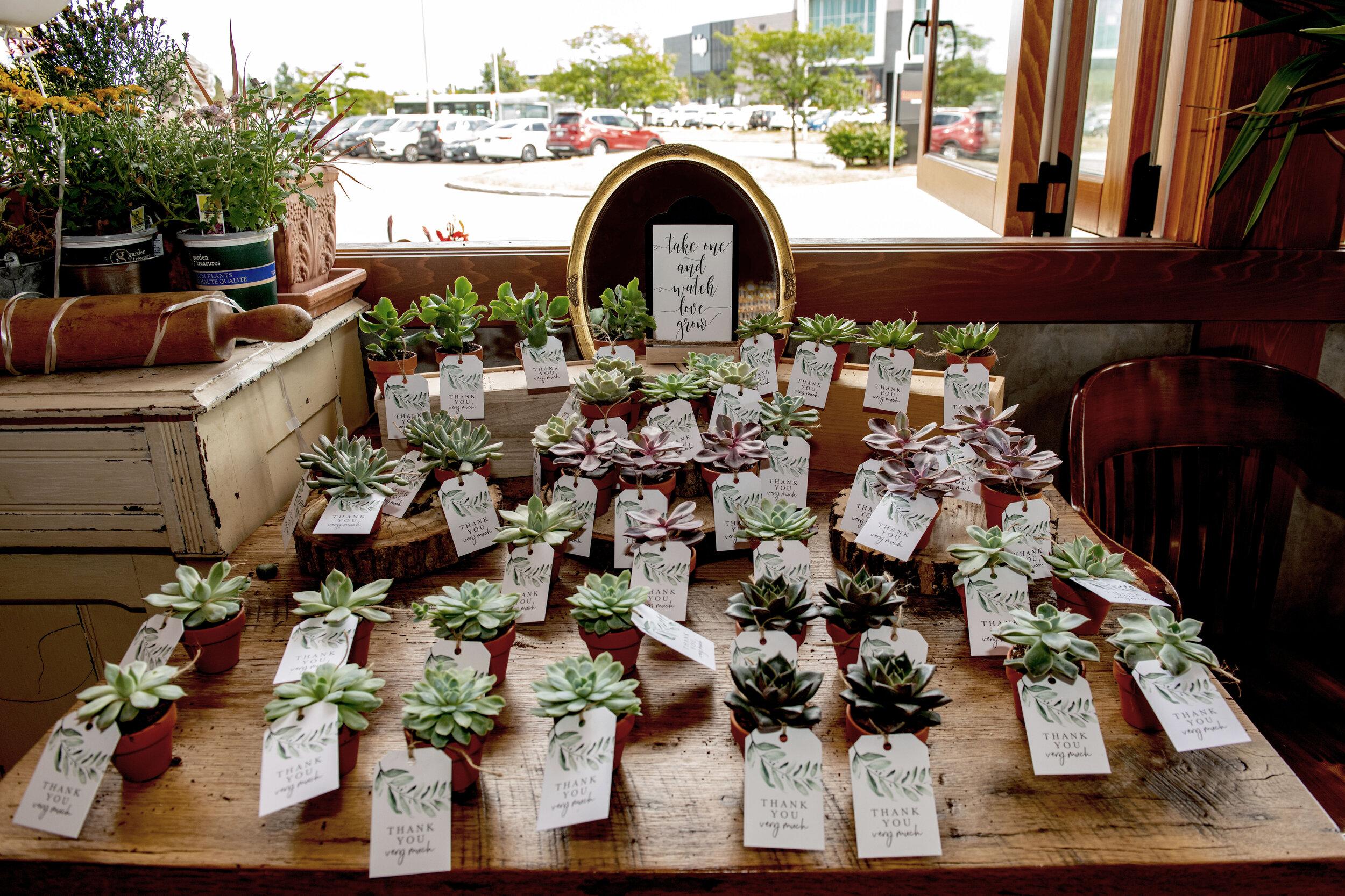 Wedding favours - succulent plants