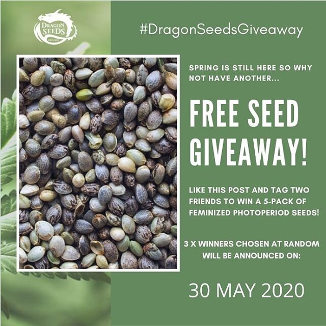 We have another spring giveaway! This time three lucky winners will get a 5-pack of feminized photoperiod seeds. To enter: 1. Like this post 2. Follow @dragonseeds.nl 3. Tag two friends. Don't forget to use the hashtag #dragonseedsgiveaway. 3 x winners will be chosen at random and will be announced on 30 May 2020. Happy tagging!