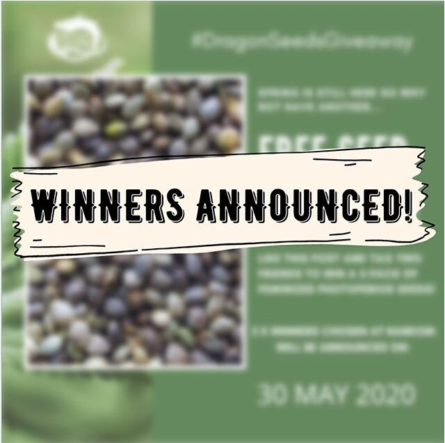 Announcing the winners for this month's #dragonseedsgiveaway! @danikellz84 @professortrichom @alanawithcannabis please send a DM to claim your prize! Thanks again to all participants. Stay tuned for the next giveaway coming soon! #dragonseedsnl #dragonseedsgiveaway #cannabiscommunity #cannabisculture #cannabisseeds #instaweed #420 #710