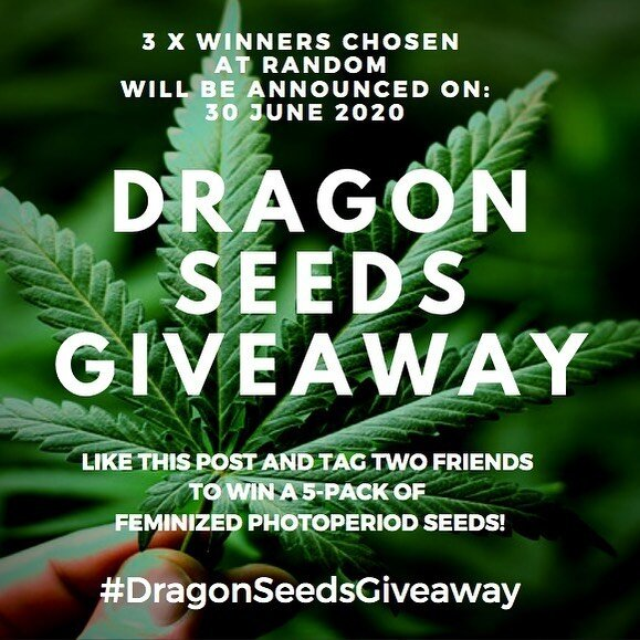 Announcing our first summer giveaway! 3 winners will get a 5-pack if feminized photoperiod seeds. Same rules as usual: 1. LIKE this post 2. FOLLOW @dragonseeds.nl 3. TAG two others and use the hashtag #dragonseedsgiveaway Three winners chosen at random will be announced on 30 June 2020. Good luck to all participants! #dragonseedsgiveaway #dragonseeds #dragonseedsnl #competition #weedstagram420 #cannabis #ganja #weed #cannabiscommunity #420 #710