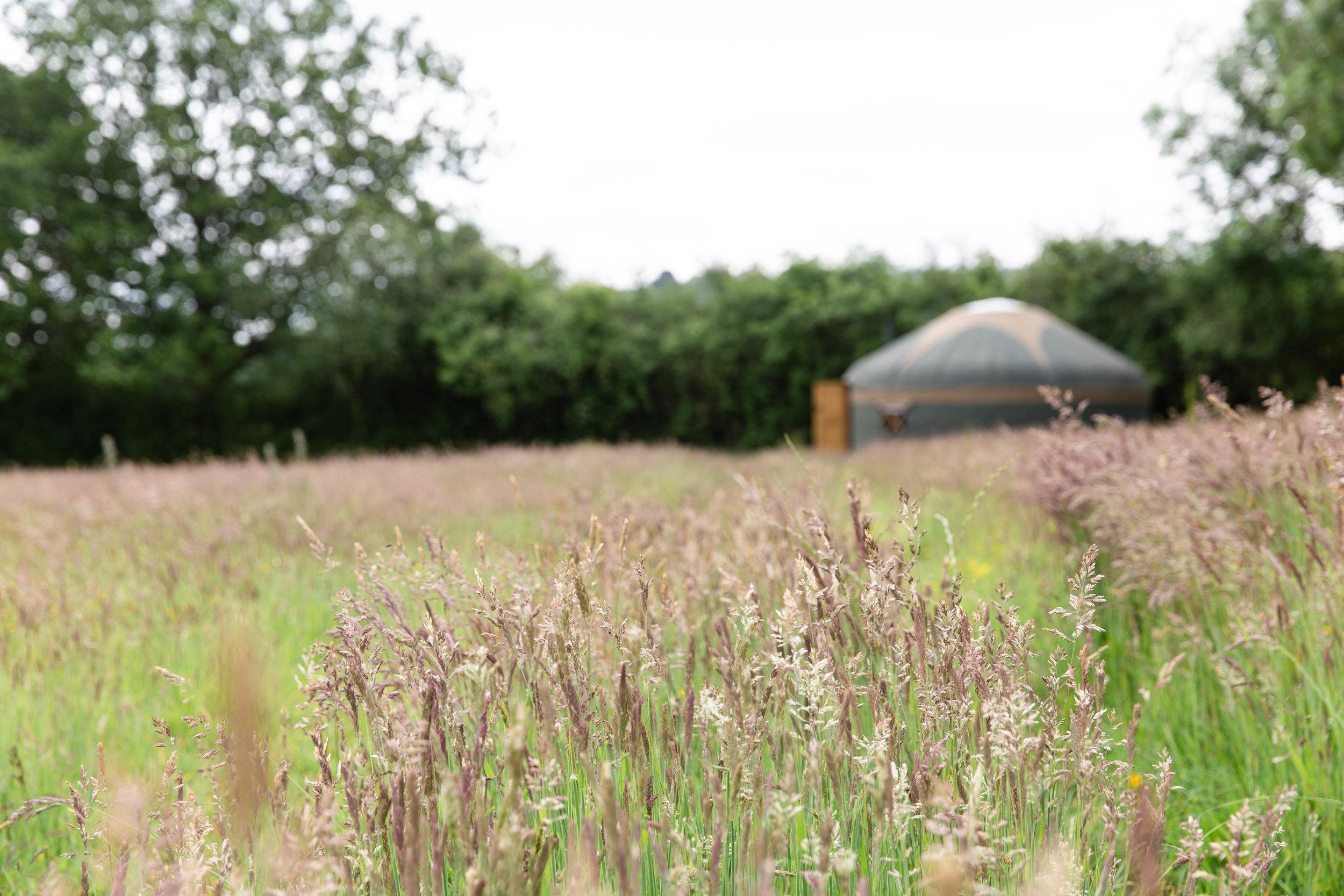 Surrey HIlls Yurts-39.jpg