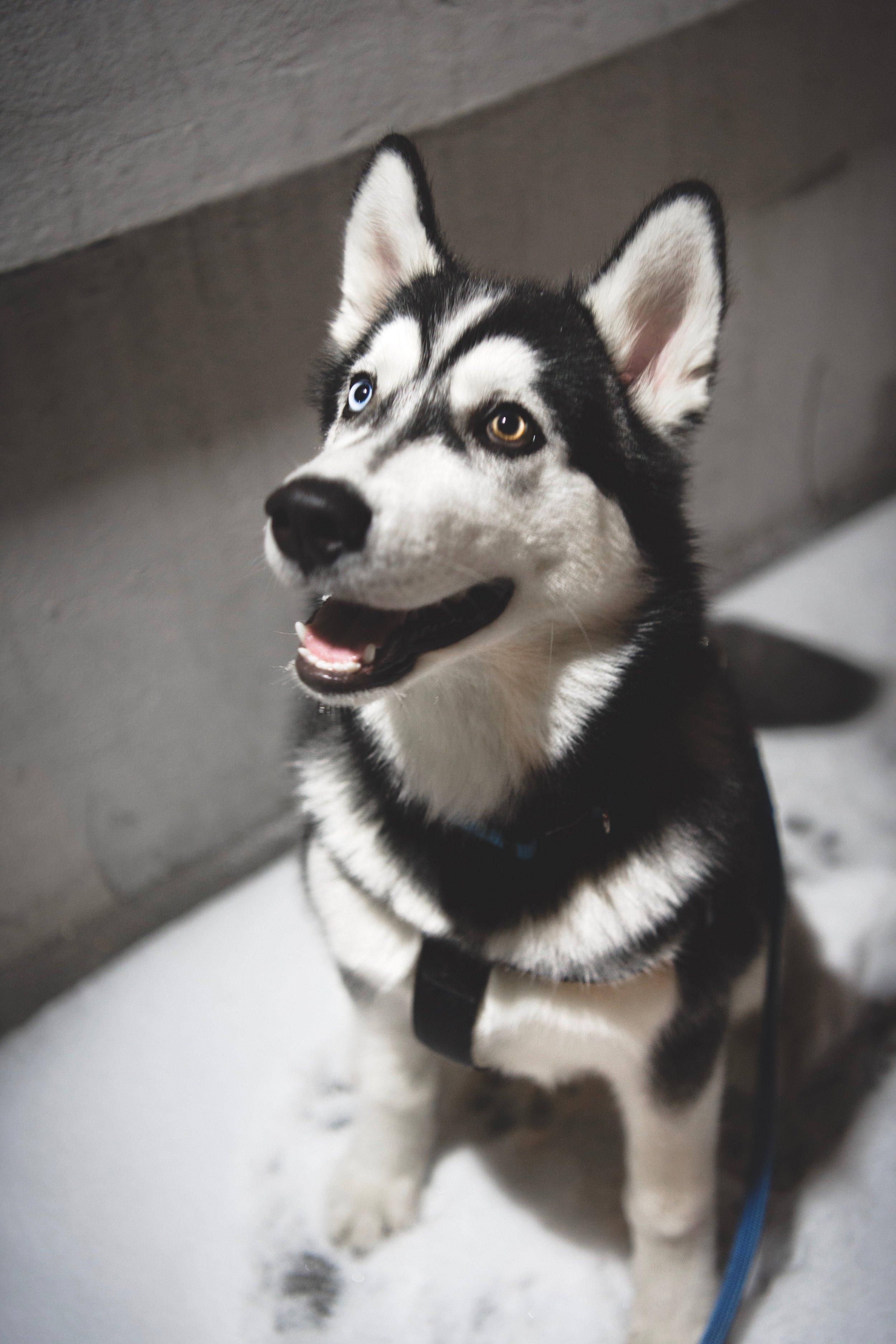 animal-blur-canine-803766.jpg