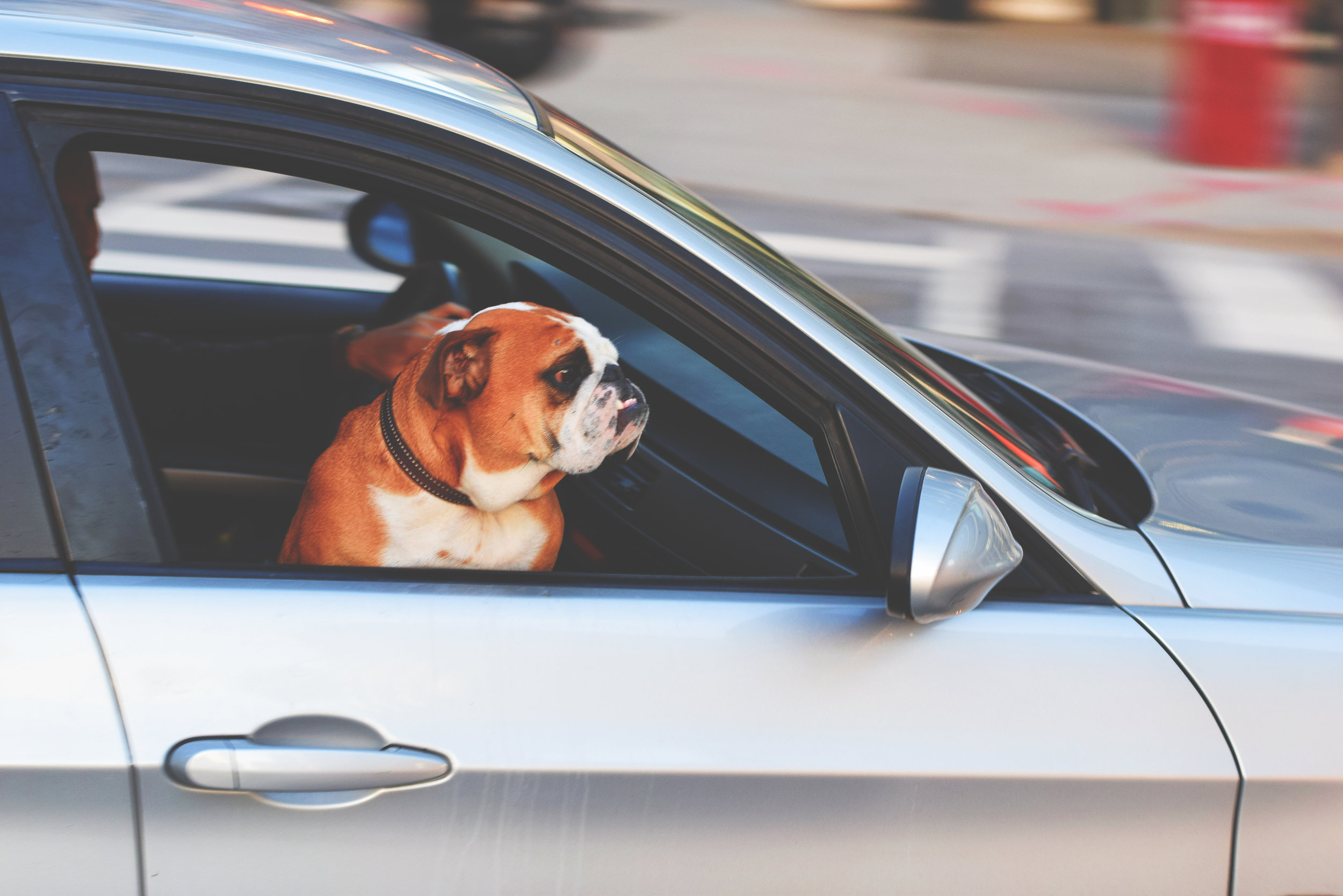 Traveling with Pets - 56% of American travelers are more likely to travel with their pets according to the 2017 Trip Advisor Annual Traveling with Pets survey.