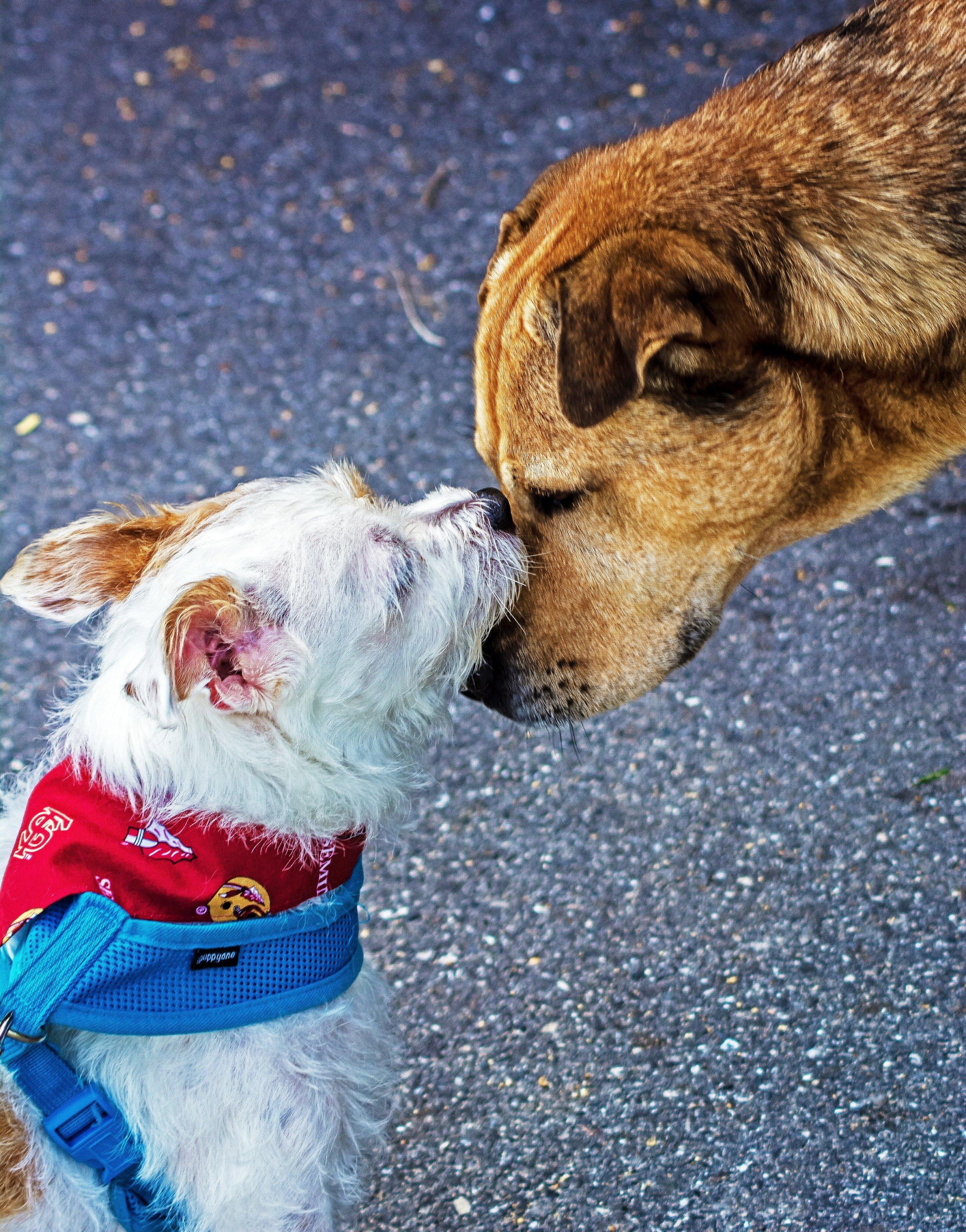 adorable-animal-animal-photography-1364729.jpg